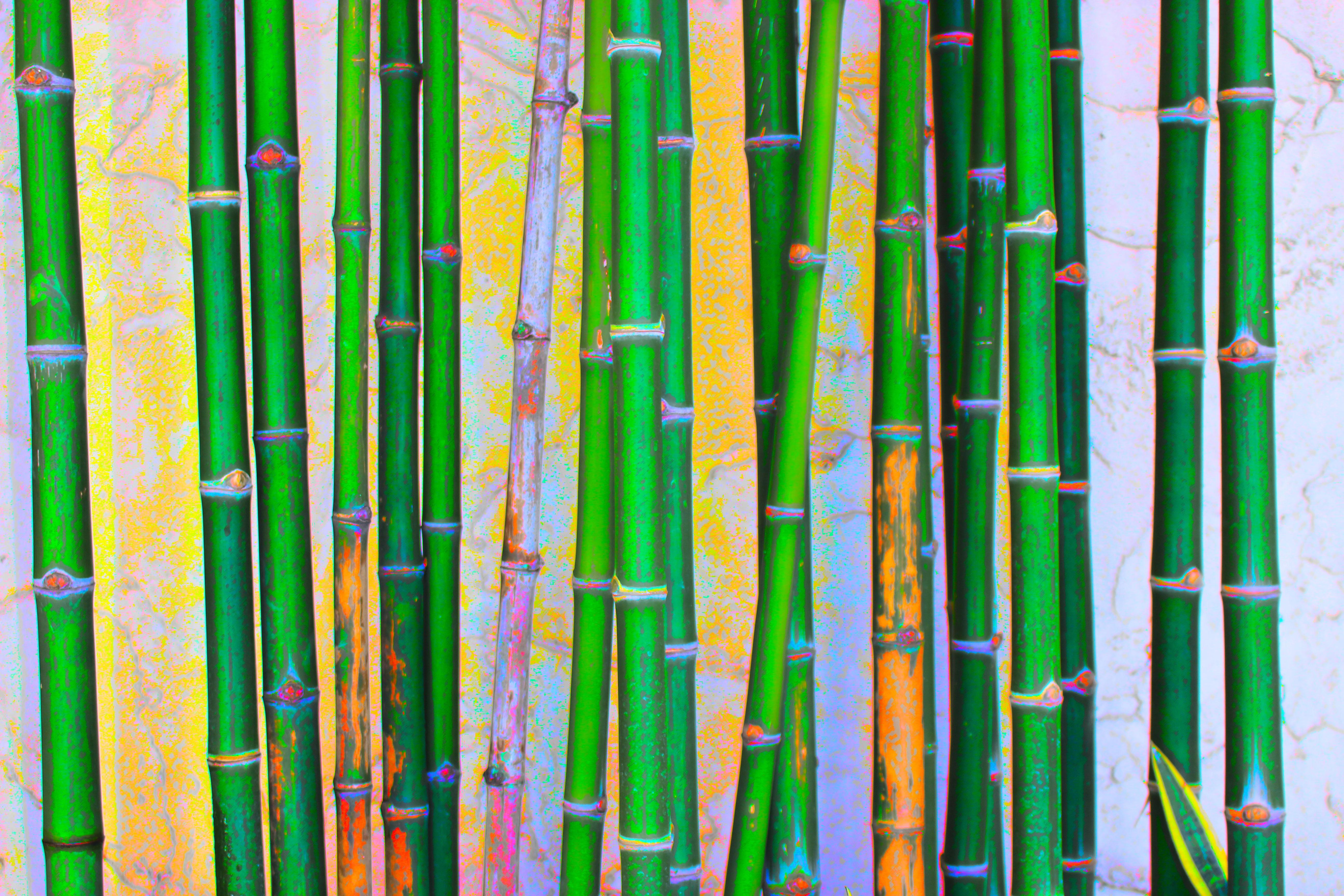 gambar pohon alam rumput outdoor pertumbuhan menanam tekstur berkembang musim panas lingkungan hidup dedaunan dekorasi pola garis hijau tropis warna perdamaian berbunga taman botani cat air tekstil latar belakang desain pxhere