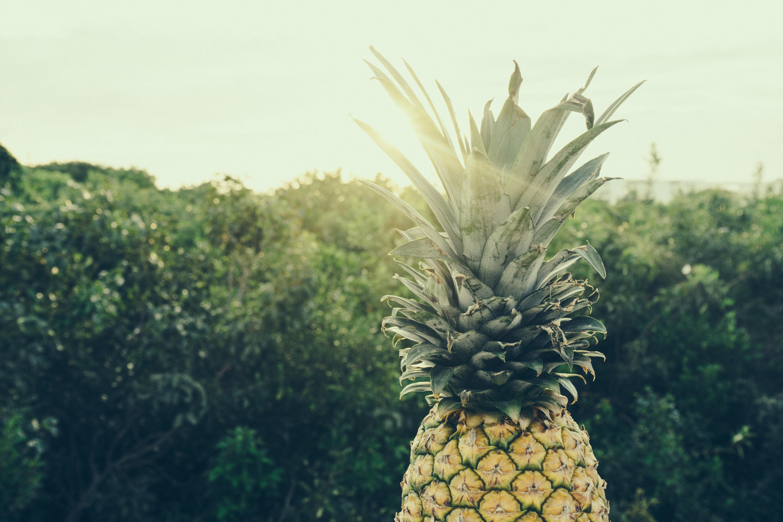 Картинки дерево ананасами