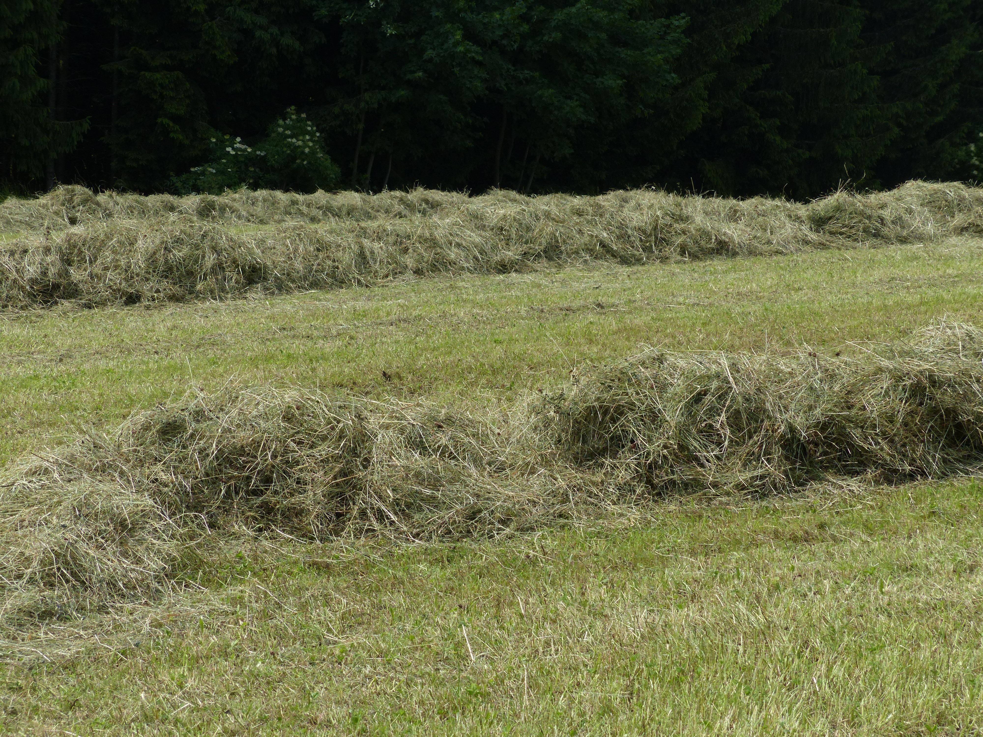 трава скошена картинка символа было