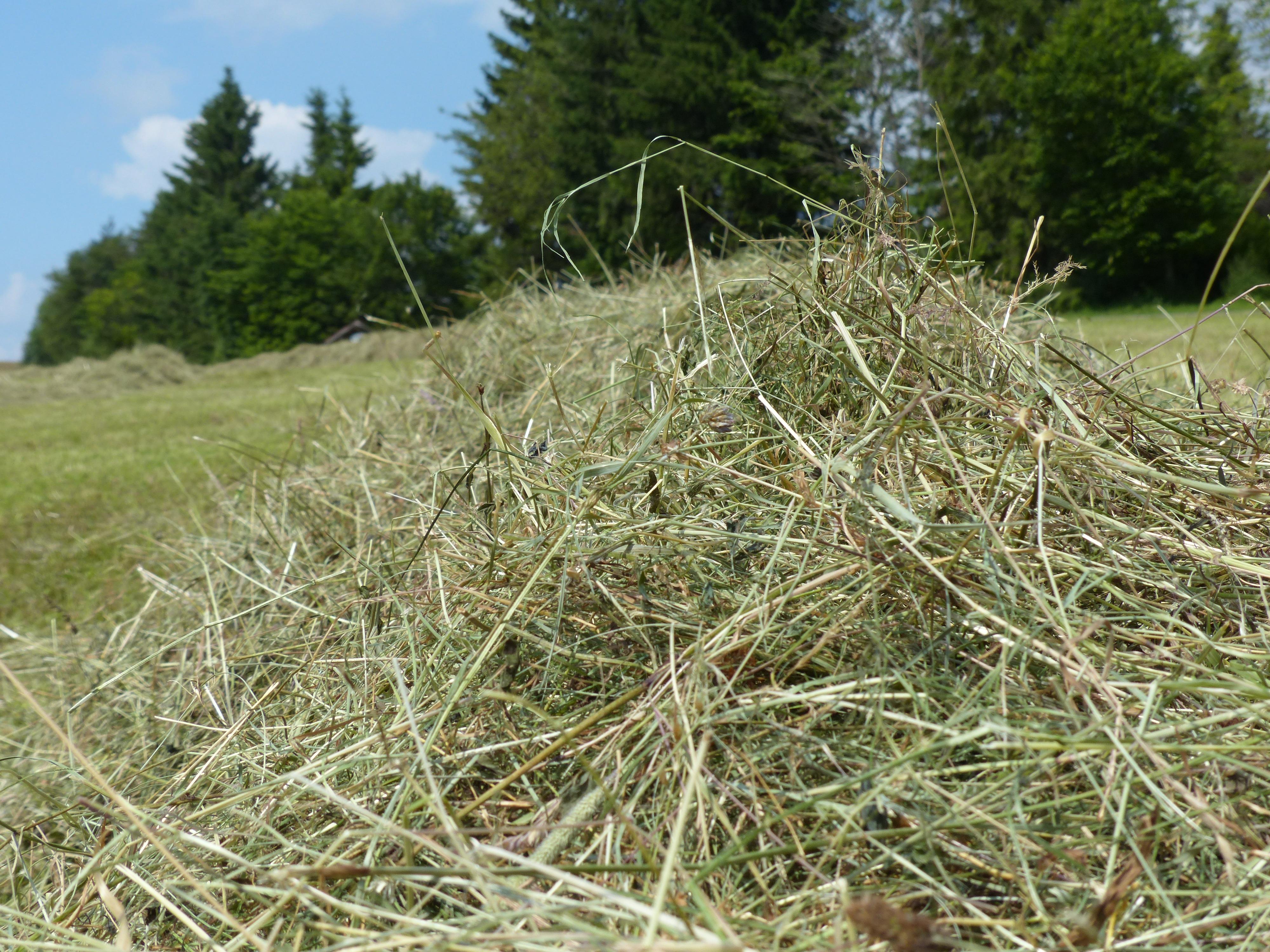 трава скошена картинка так или иначе