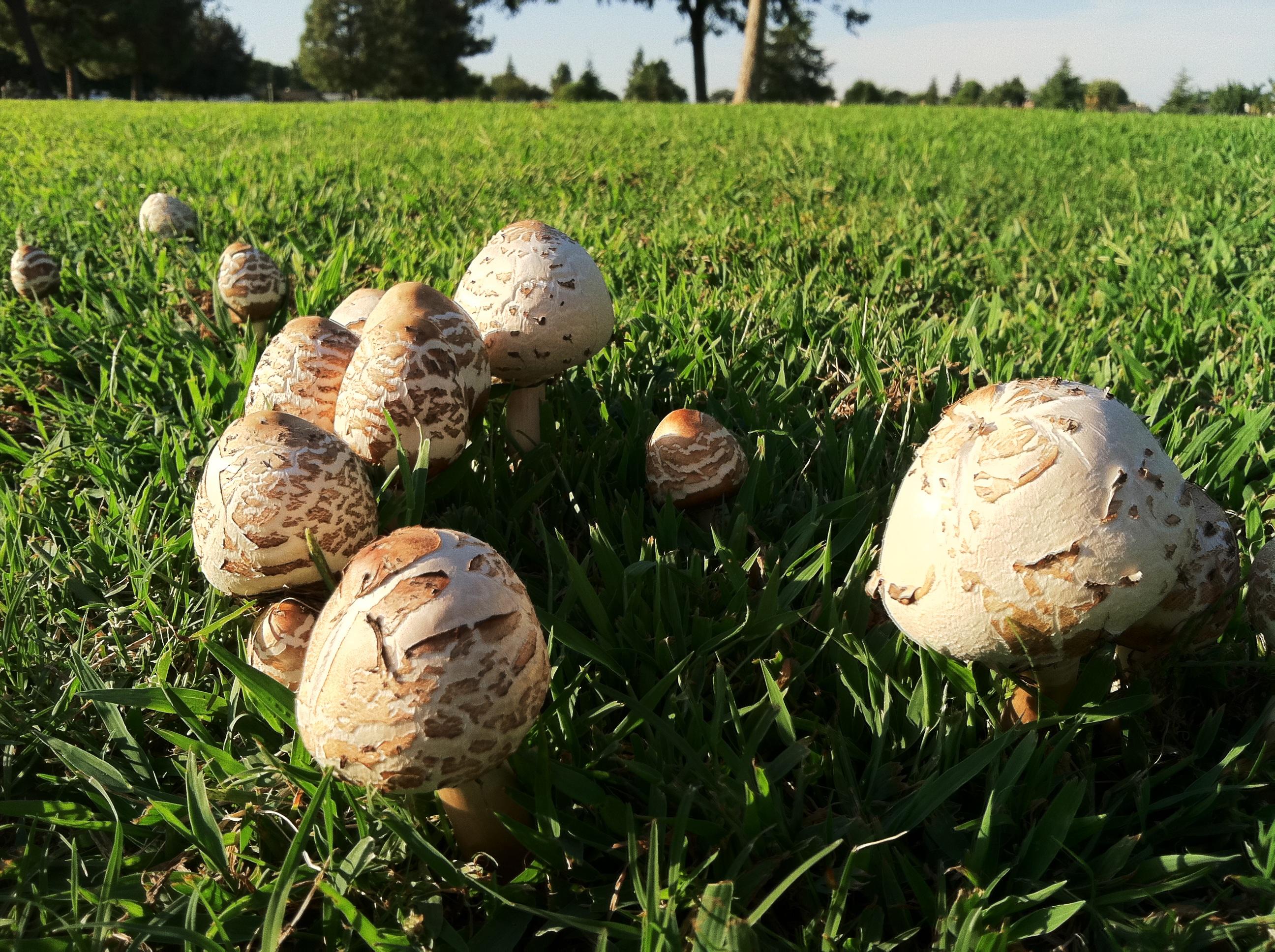 Картинки грибов на полях