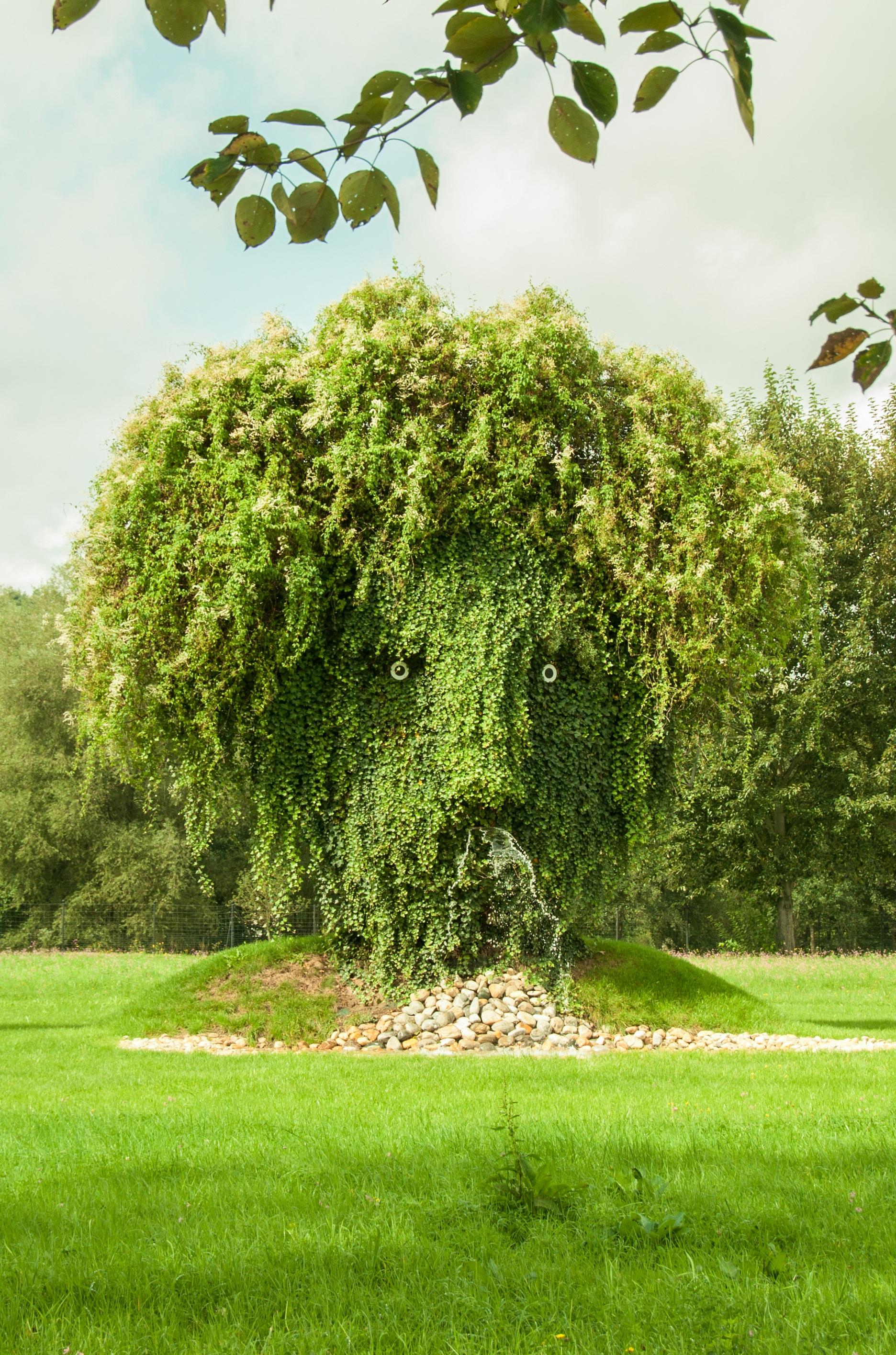 Kostenlose foto Baum Natur Gras Rasen Wiese Blume Grün