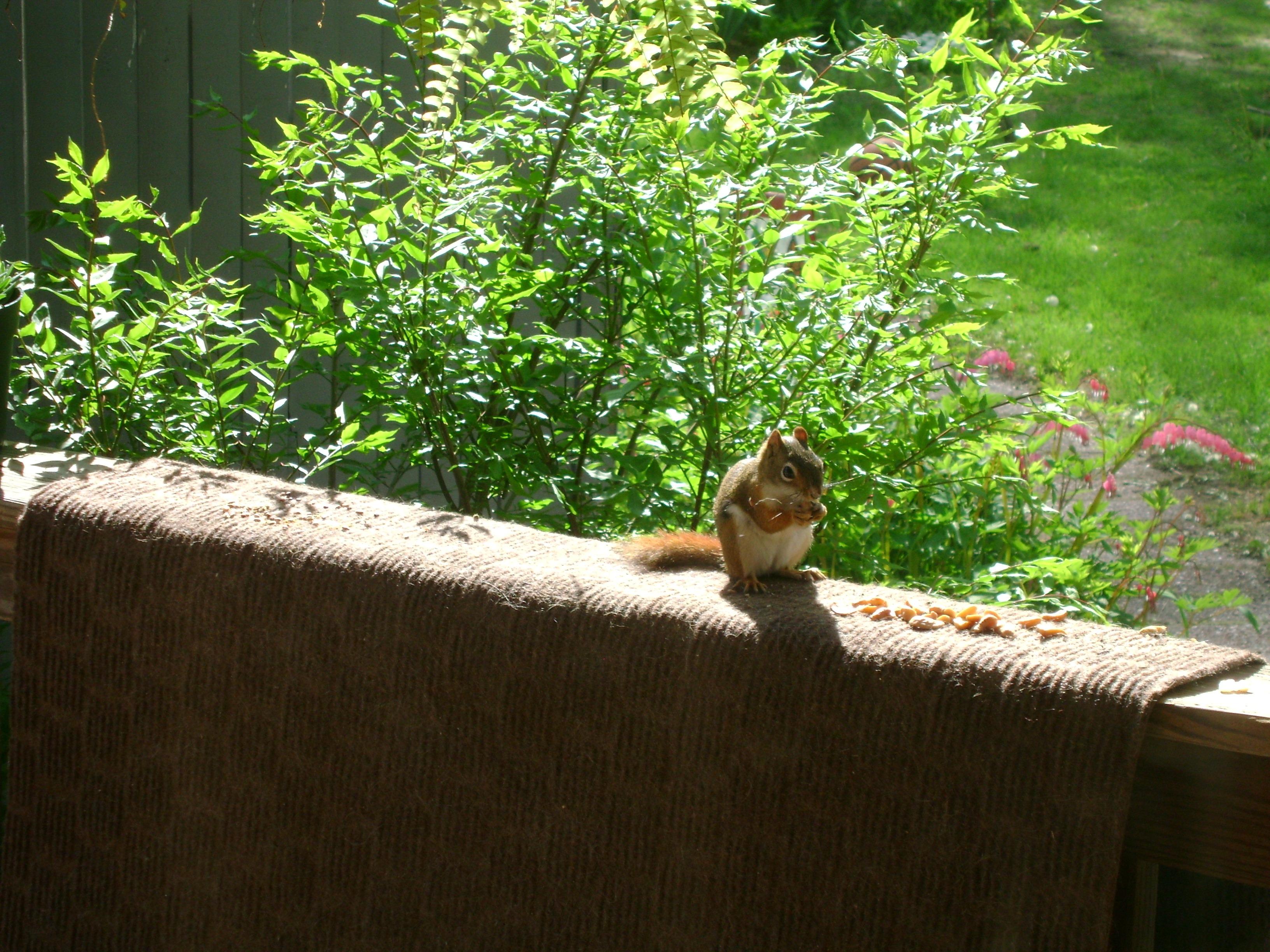 Images gratuites arbre la nature herbe plante bois lumi re du soleil feuille animal - Herbe a chat plante ...