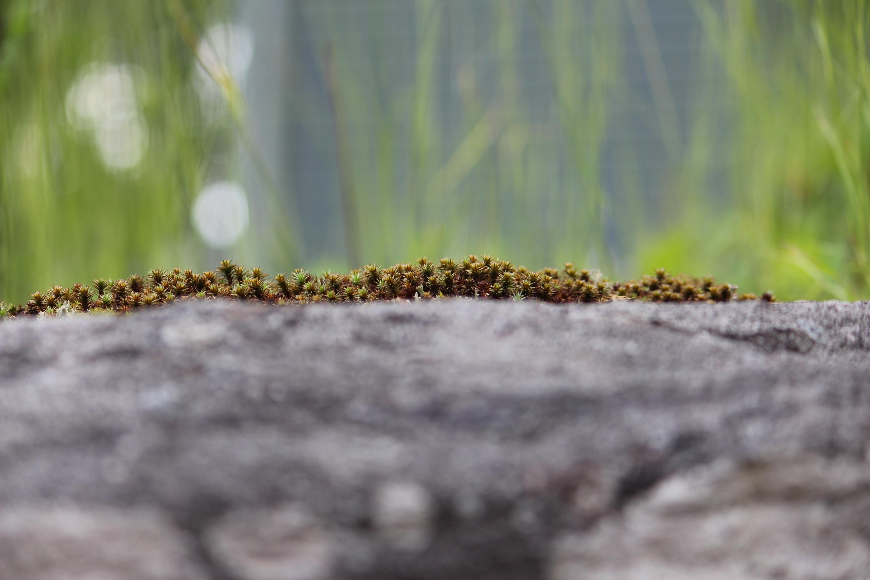 Fotoğraf Ağaç Doğa çimen Kaya Bitki Yaprak çiçek Yosun