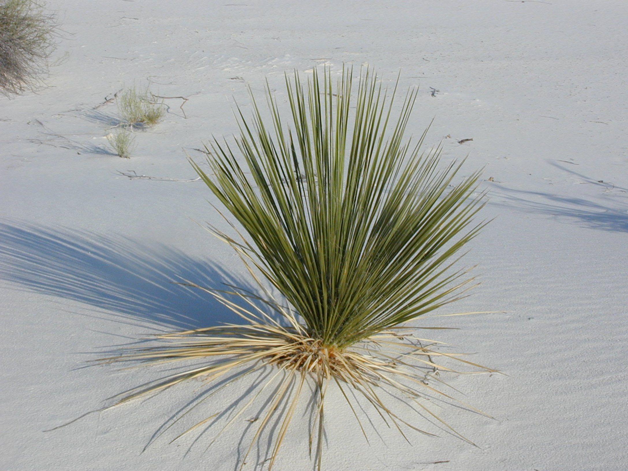 free images tree nature sand branch leaf flower. Black Bedroom Furniture Sets. Home Design Ideas