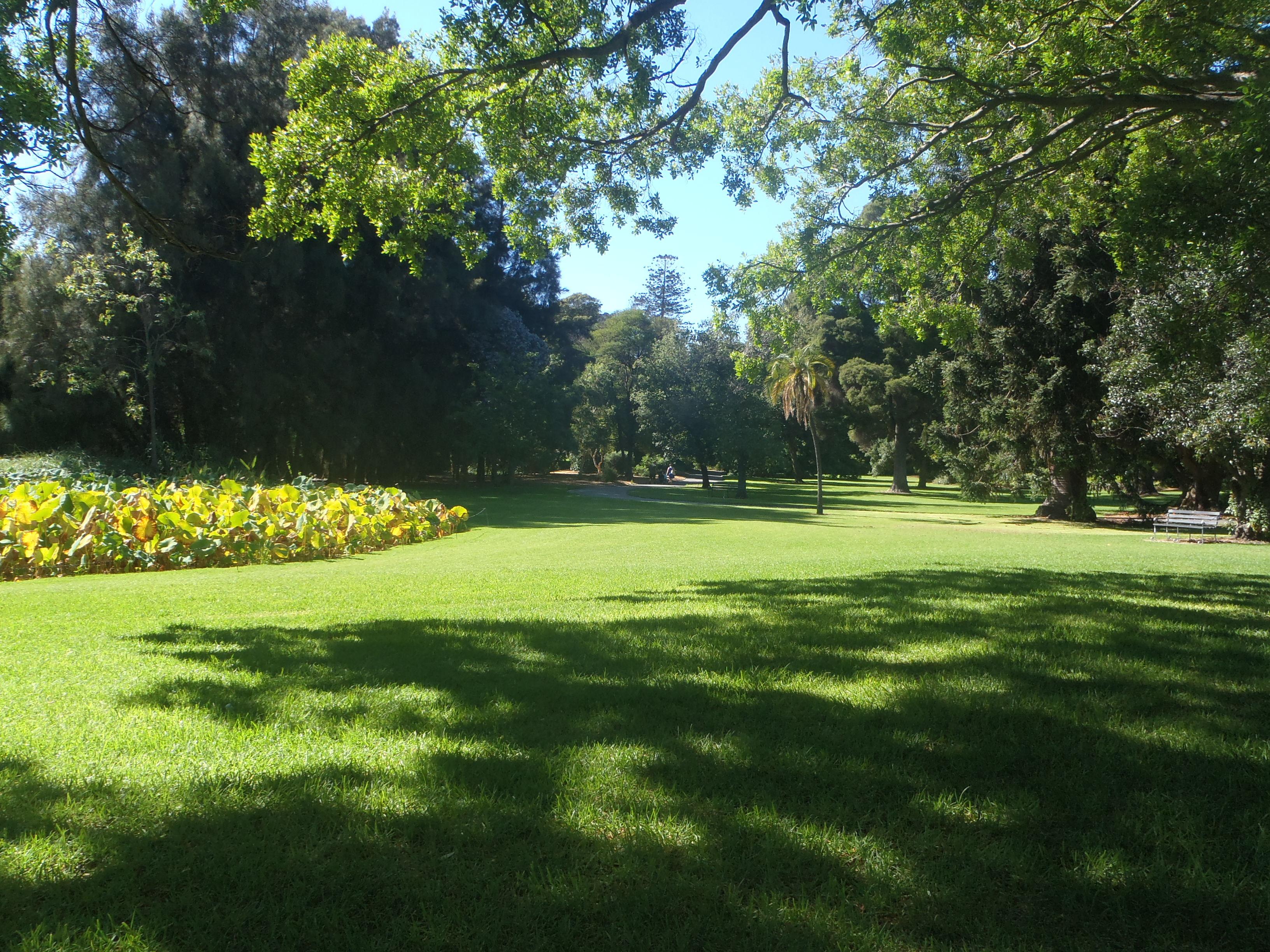 Fotos gratis rbol naturaleza c sped estructura for Landscaping courses adelaide