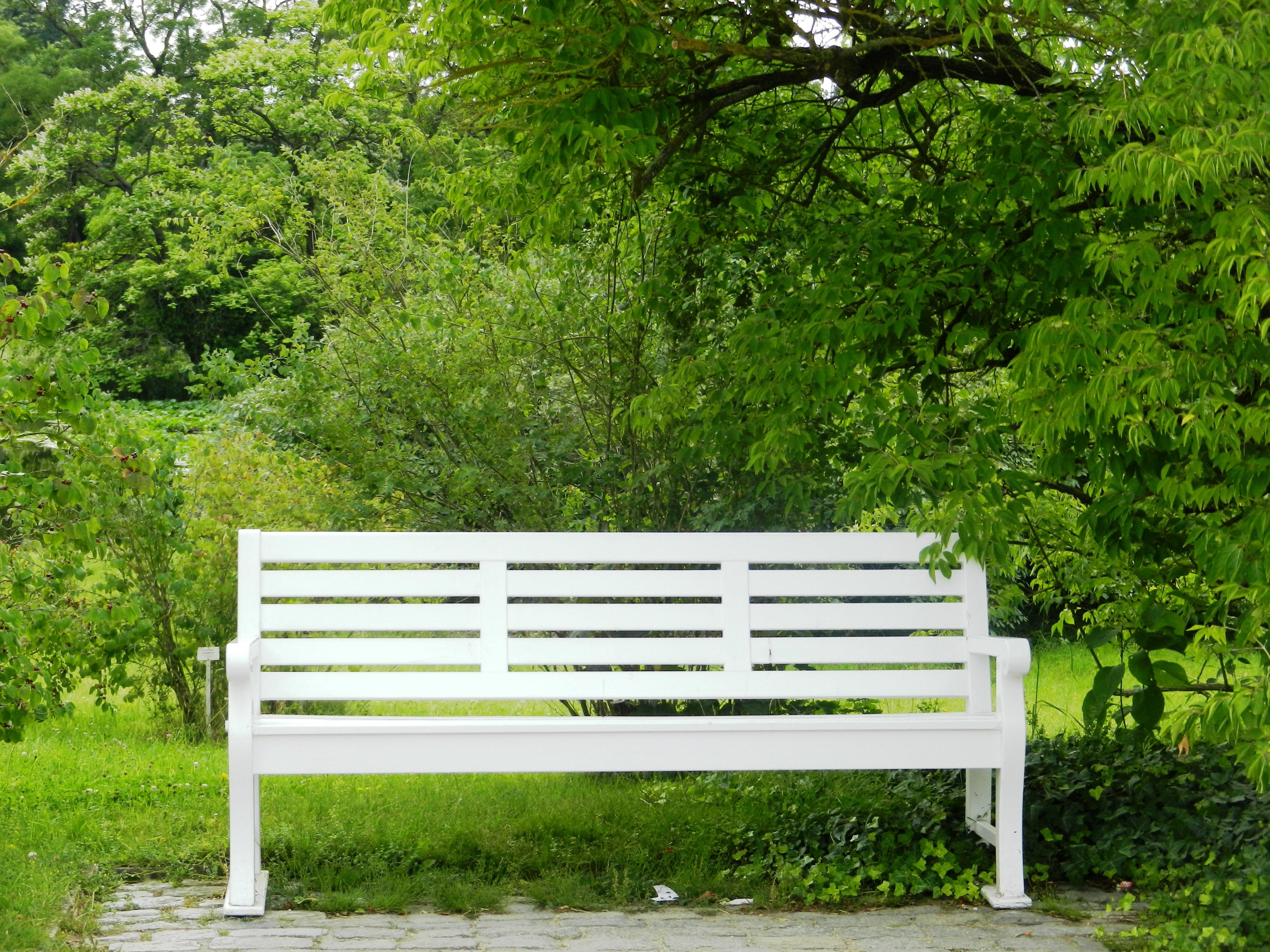 Fotos Gratis : árbol, Naturaleza, Césped, Blanco, Banco