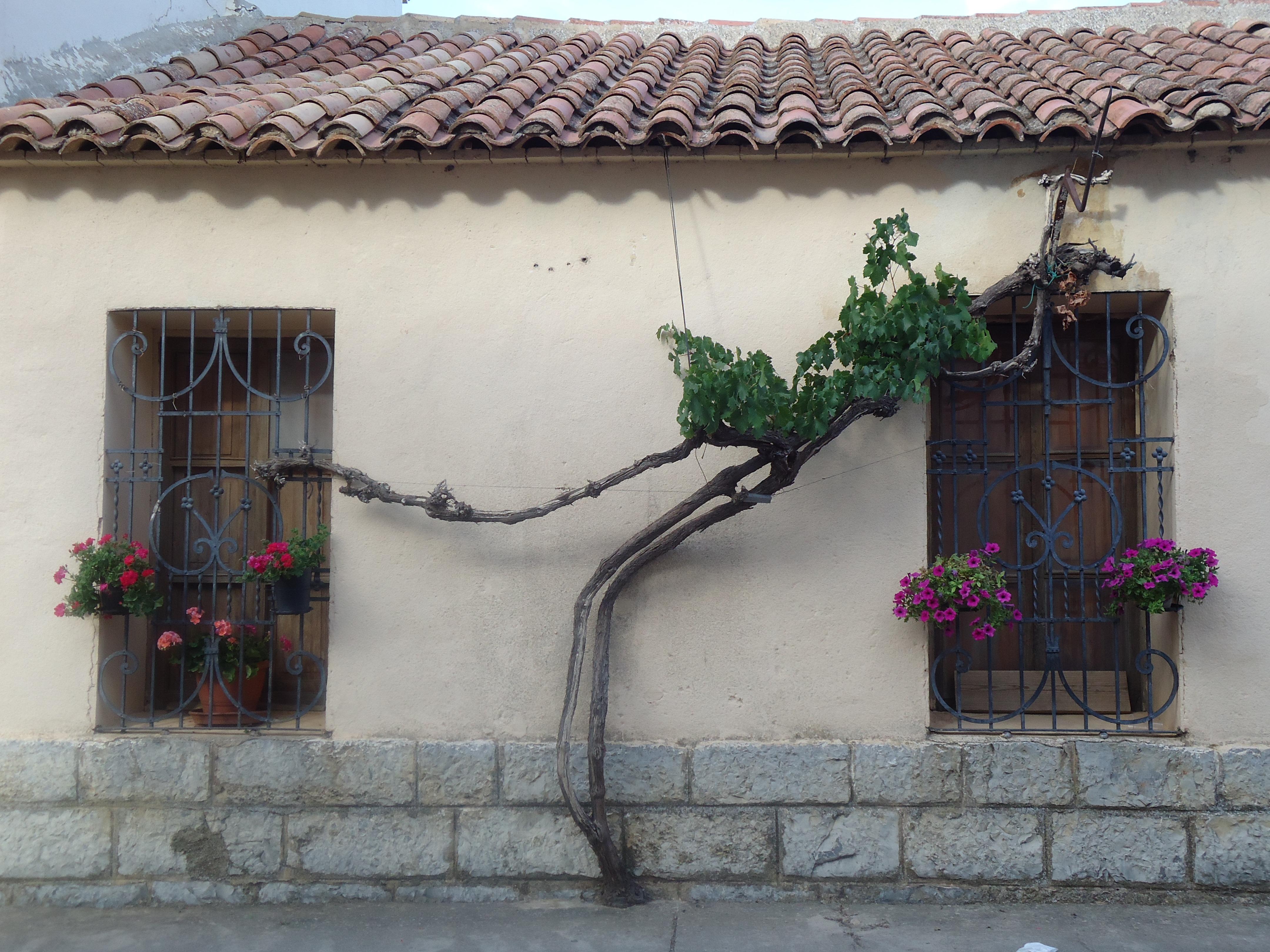 Gratis billeder : træ, natur, vækst, hus, vindue, hjem, væg, altan ...