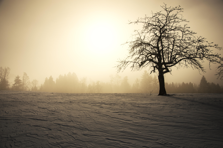 sun fog sunrise trees - photo #30