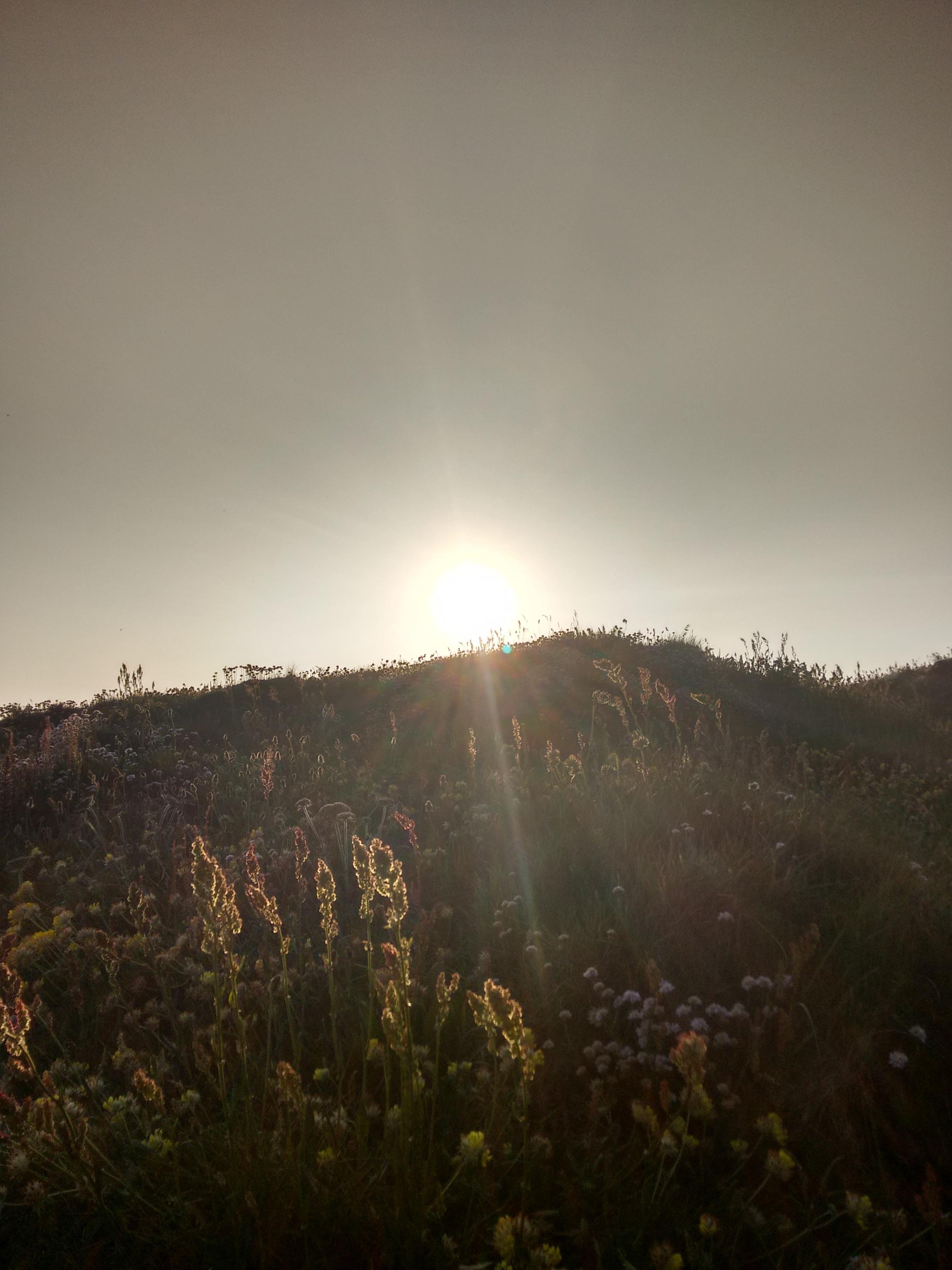 sun fog sunrise trees - photo #26