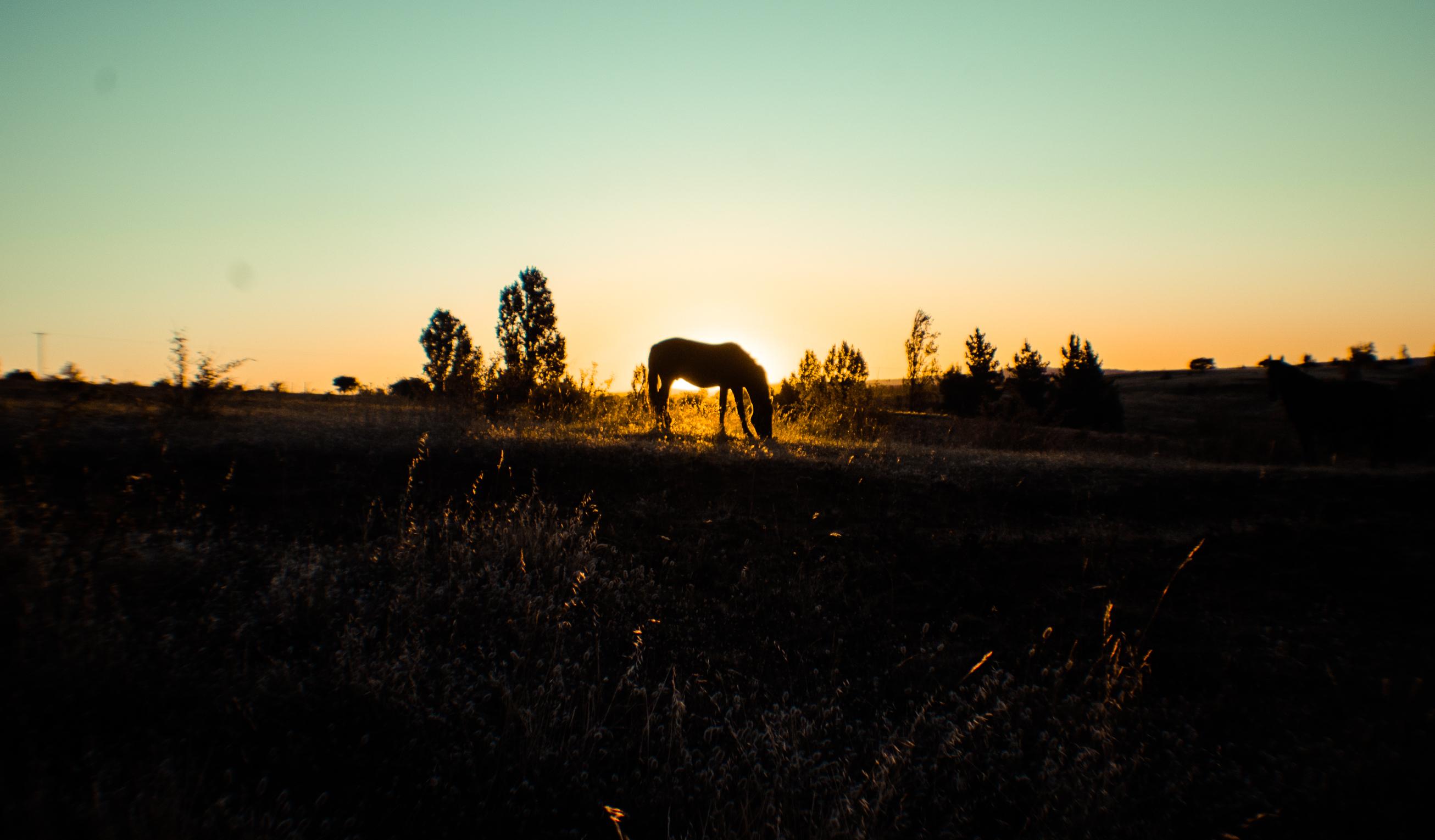 Fotos gratis : árbol, naturaleza, horizonte, silueta ...