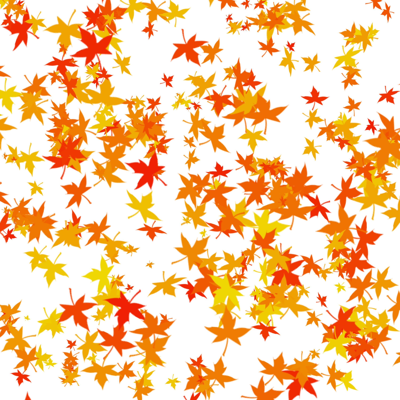 Fotos gratis : árbol, naturaleza, flor, pétalo, naranja, patrón ...