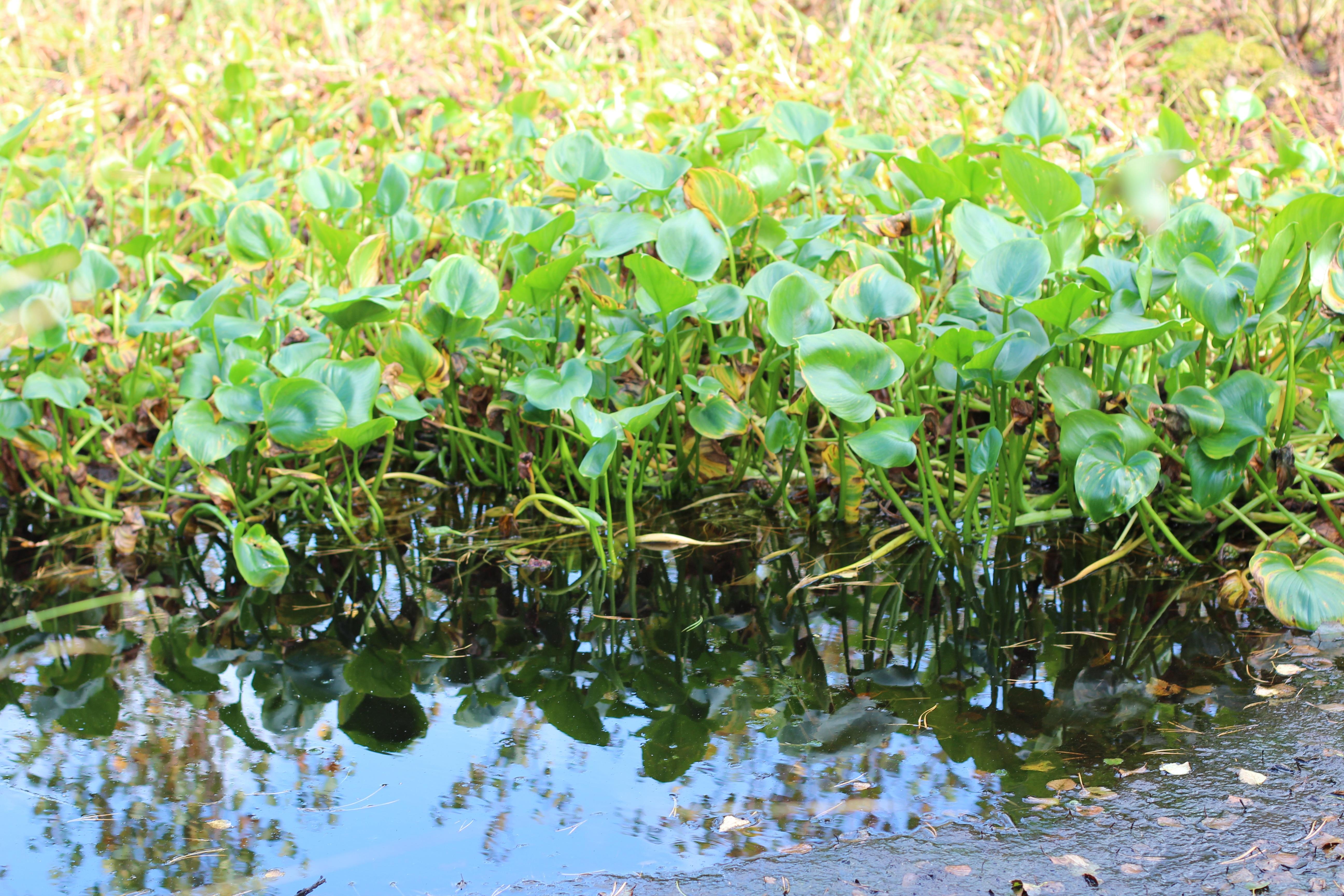 некоторых болотная растительность фото прекрасно осознаю, что