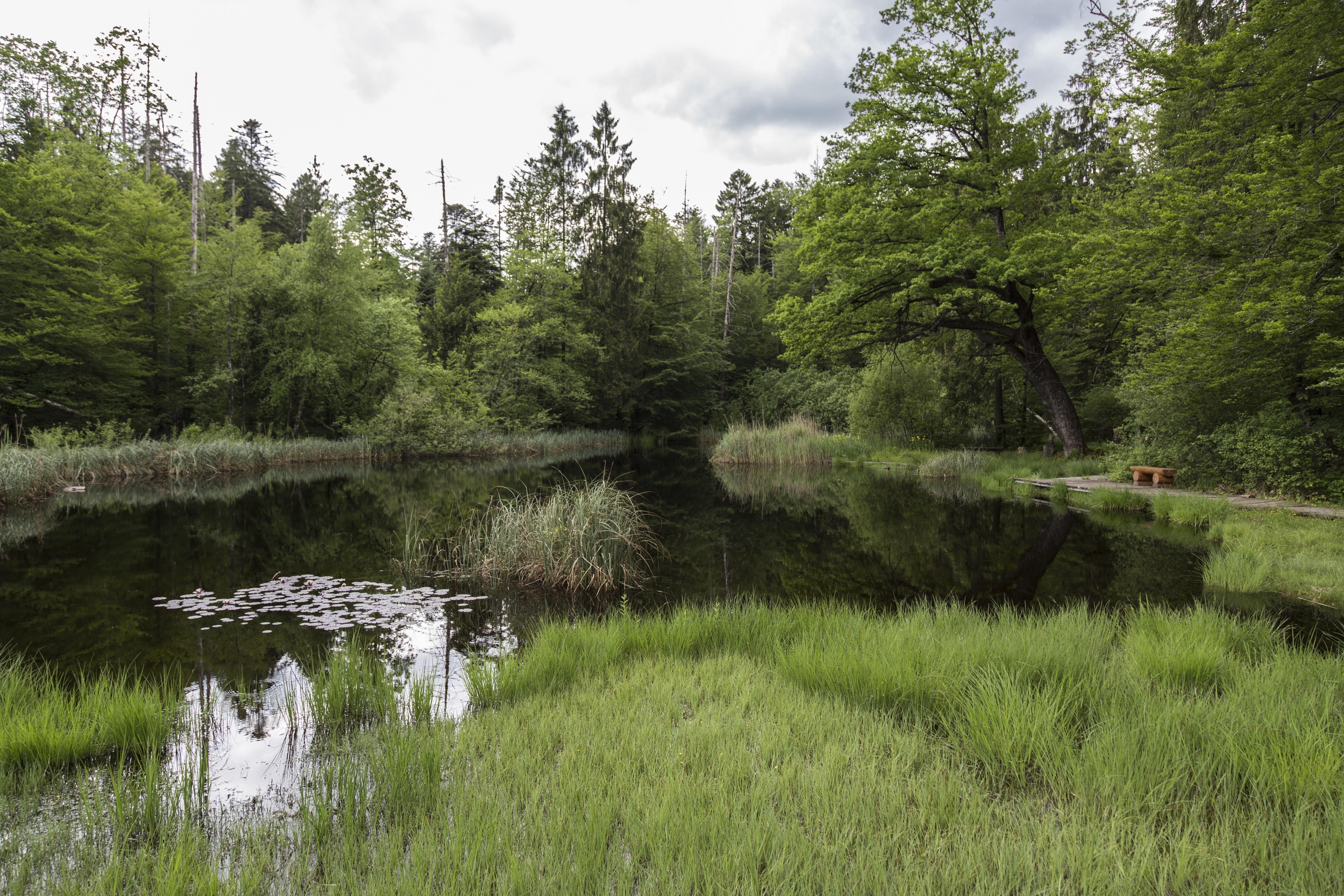 free images tree marsh wetlands swamp wilderness