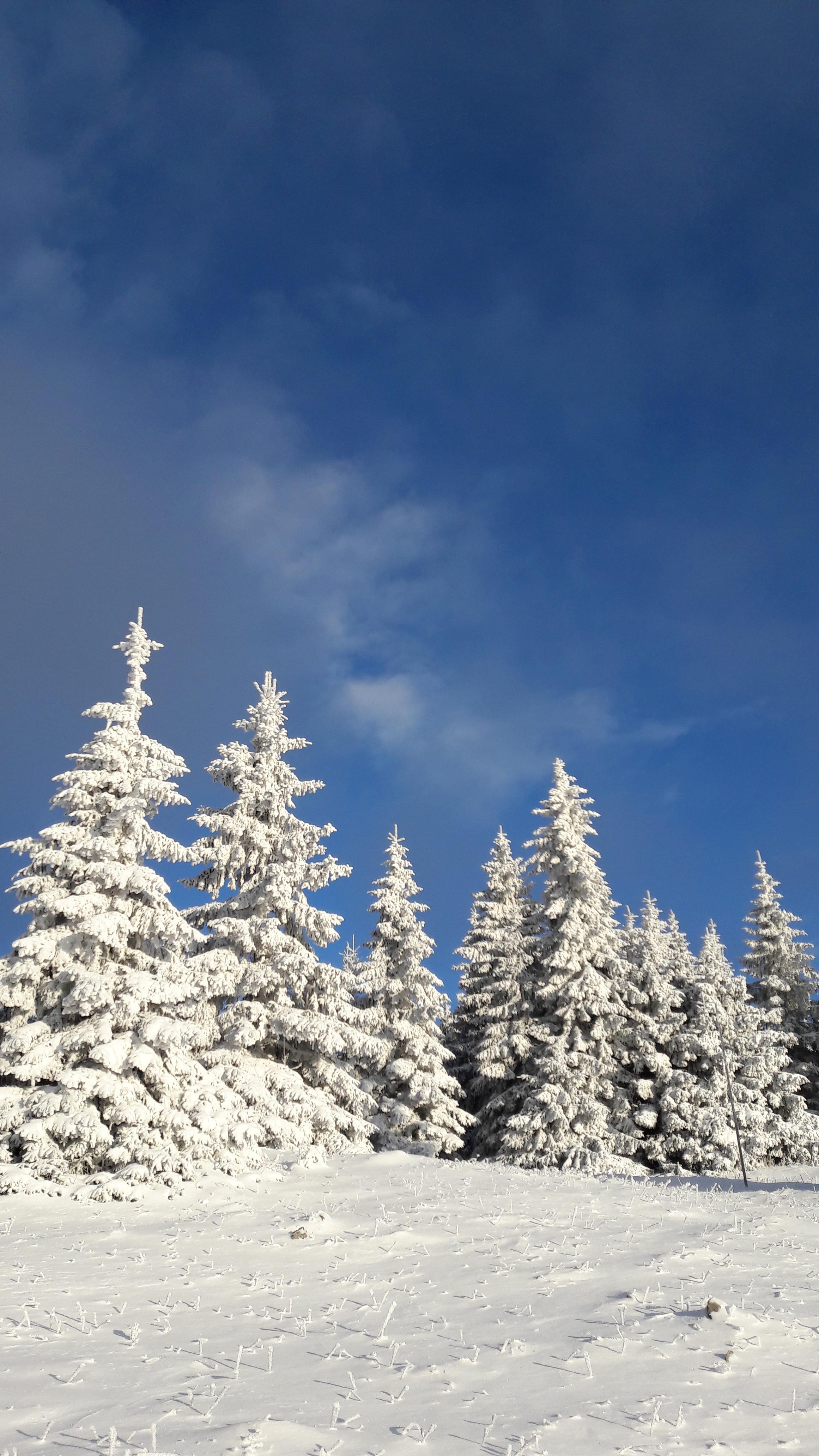 Images Gratuites Arbre La Nature Montagne Neige Hiver