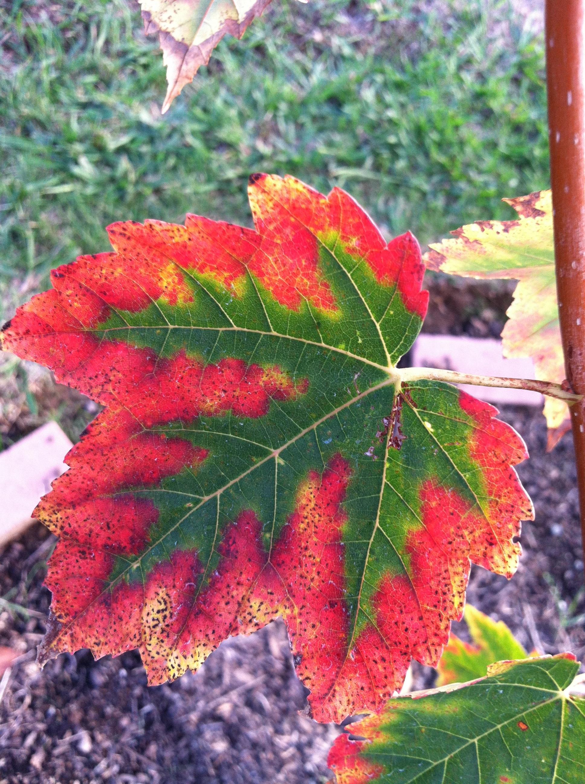 Fotos gratis naturaleza al aire libre rama oto o for Arbol rojo jardin