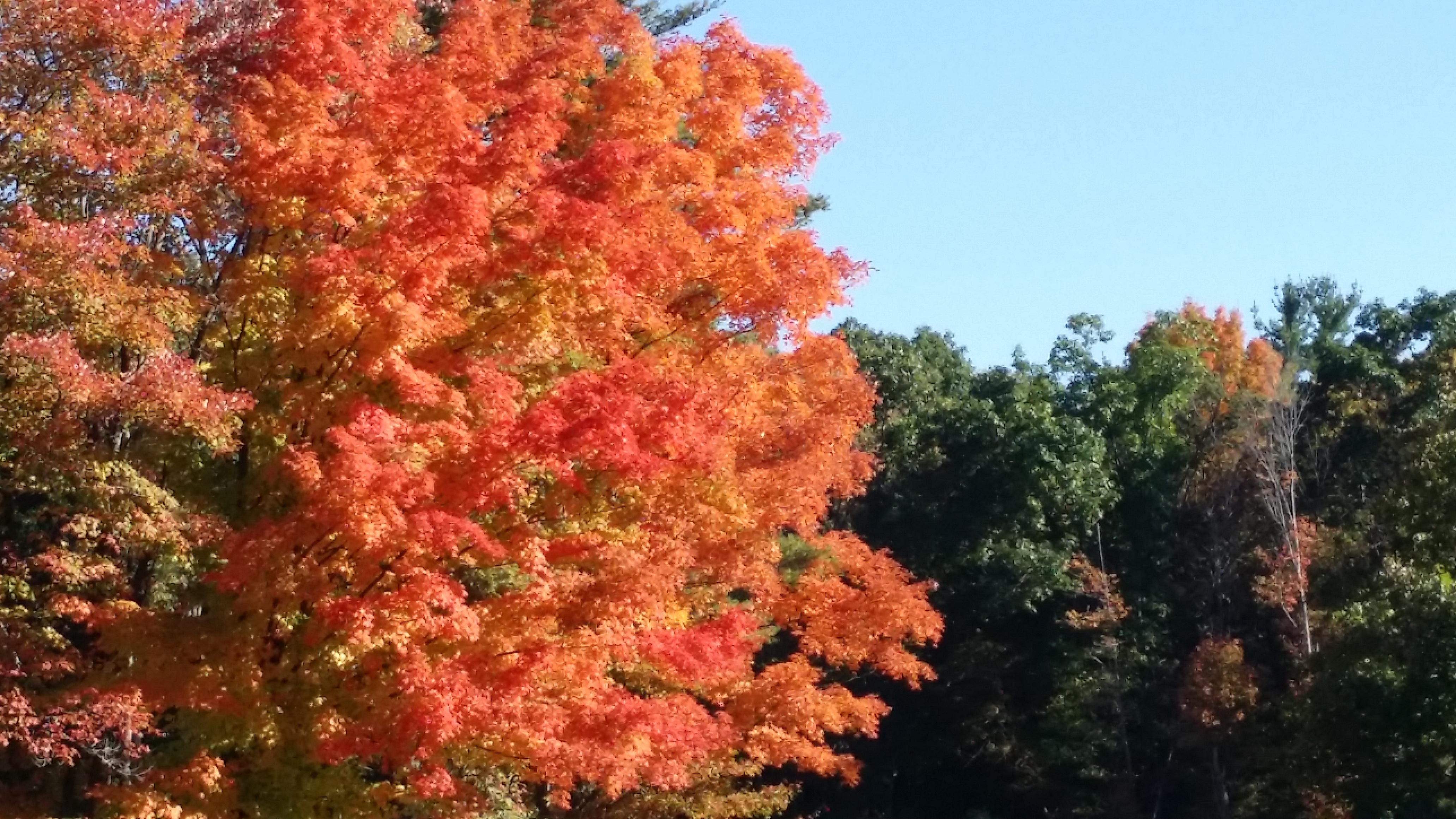 Célèbre Images Gratuites : arbre, la nature, de plein air, branche  BI73
