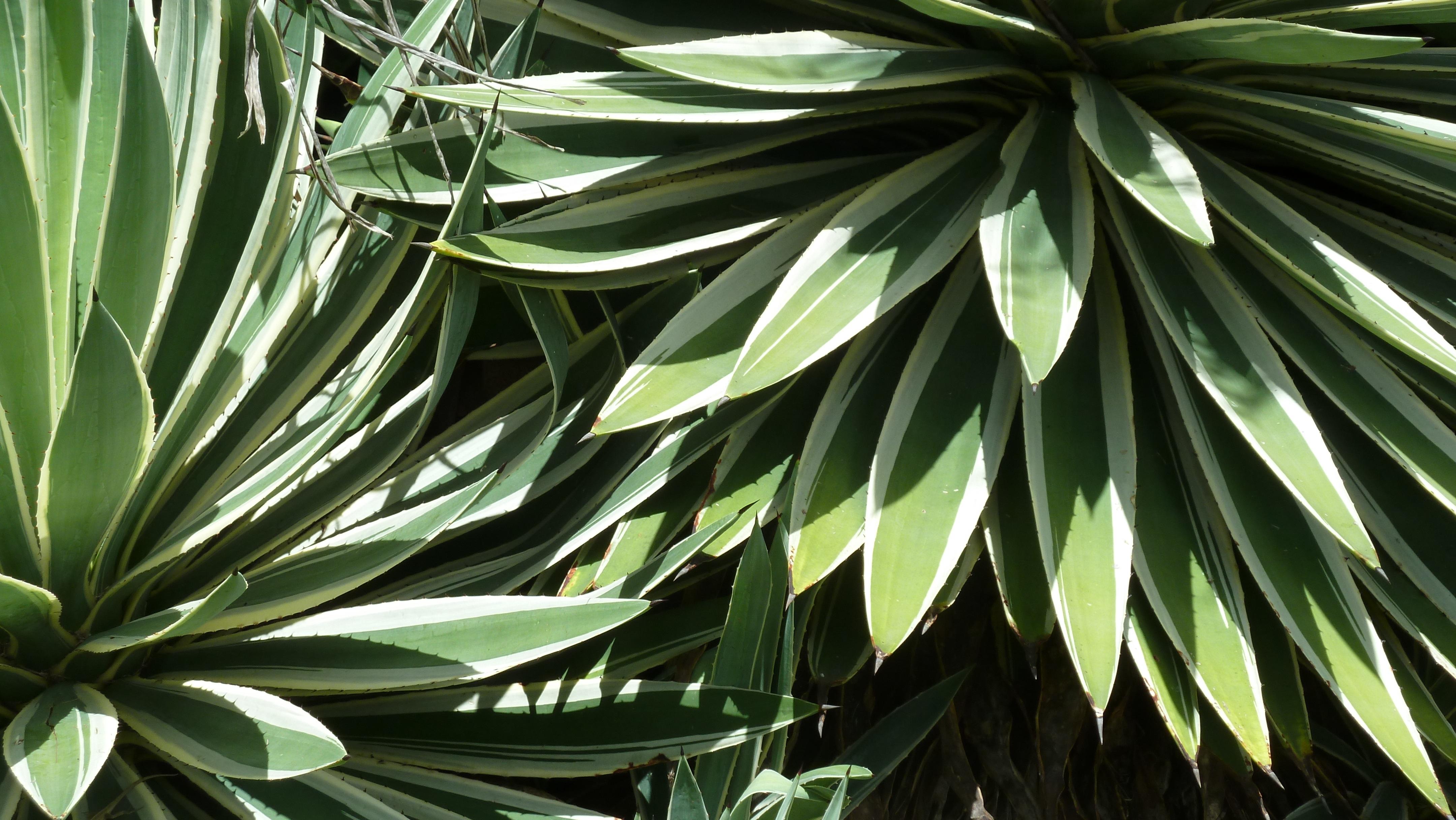 Images gratuites arbre la nature de plein air branche for Plante ligneuse