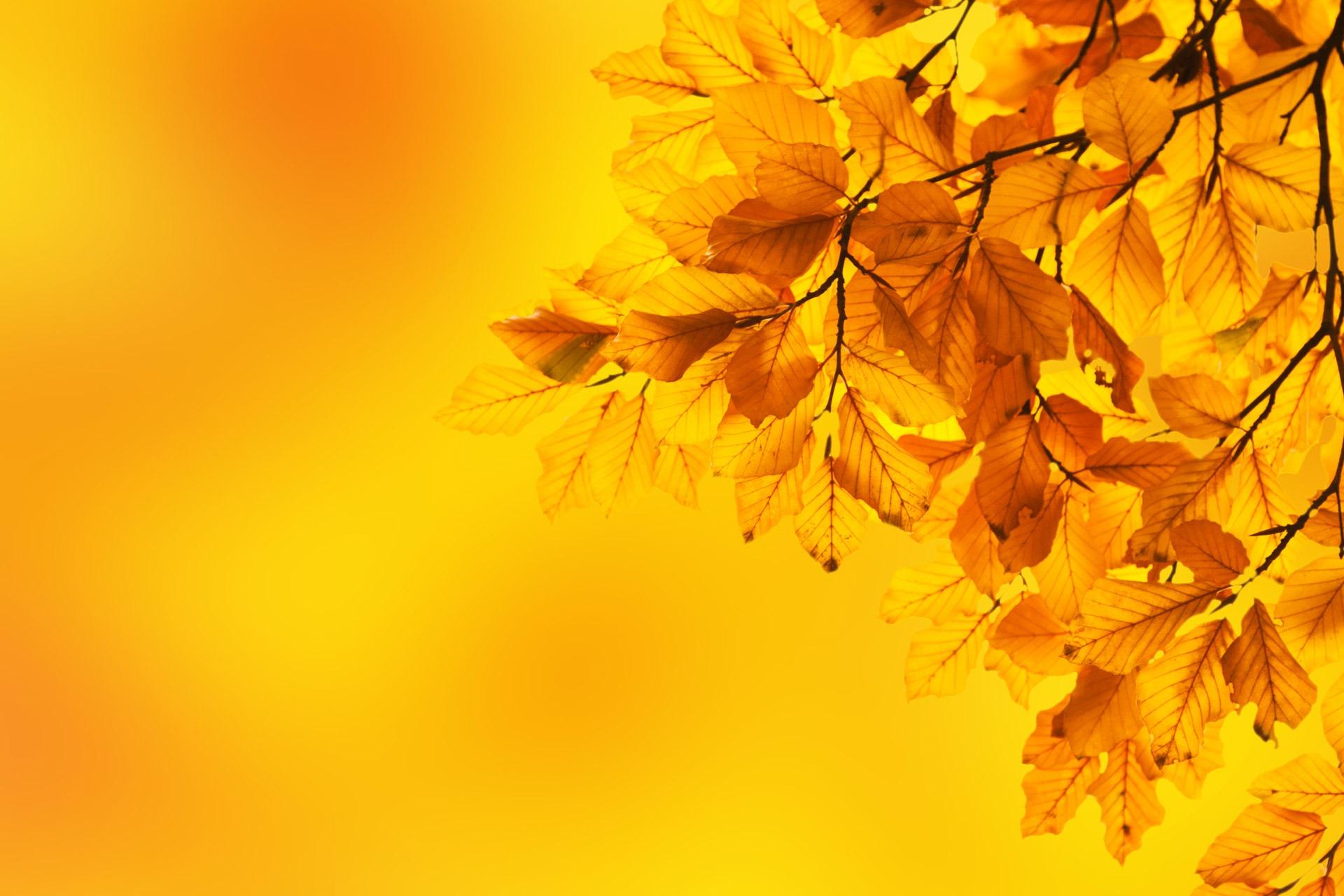 Картинки про осень для презентации, картинки мама