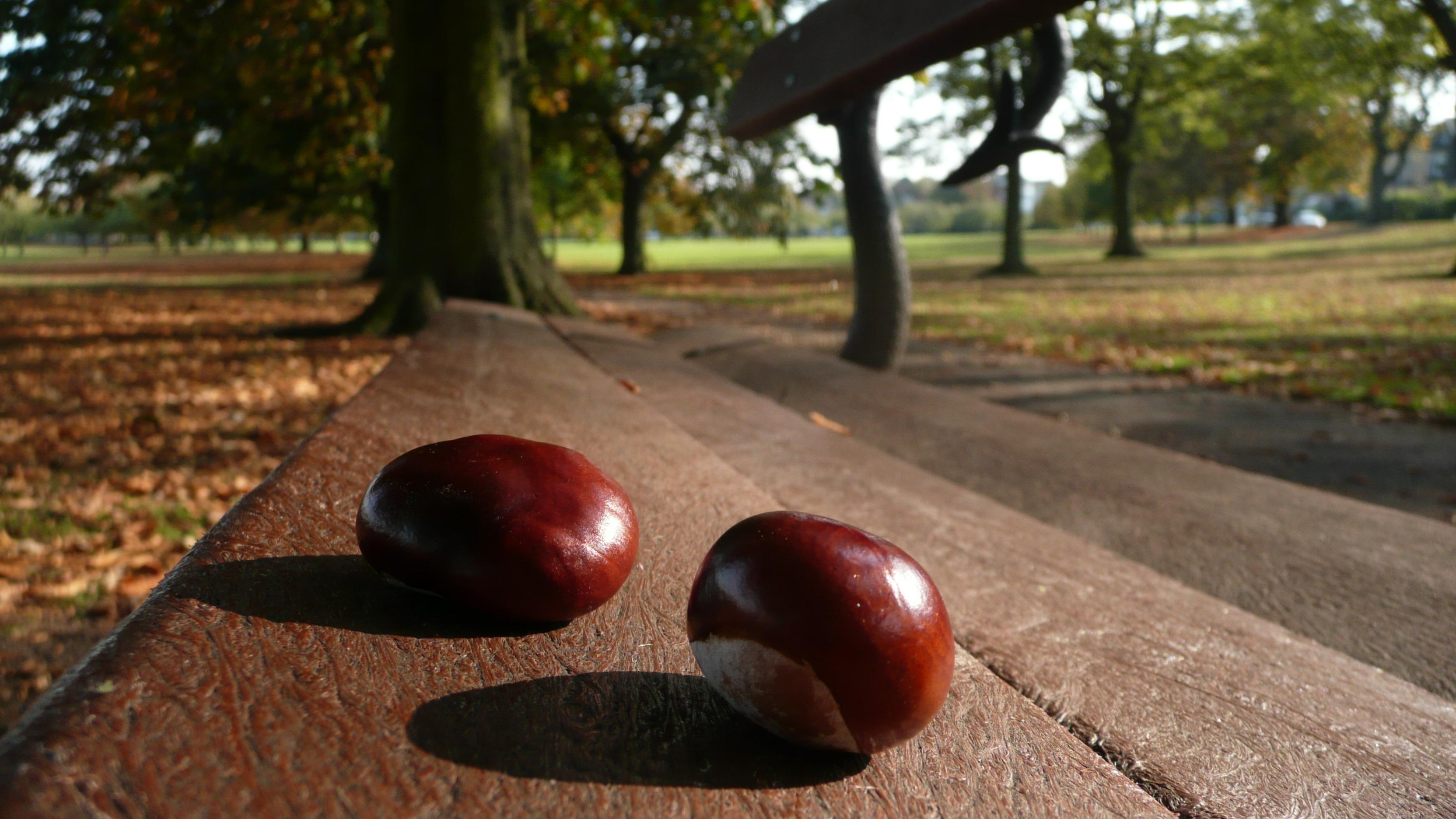 free images tree nature bench fruit leaf food produce