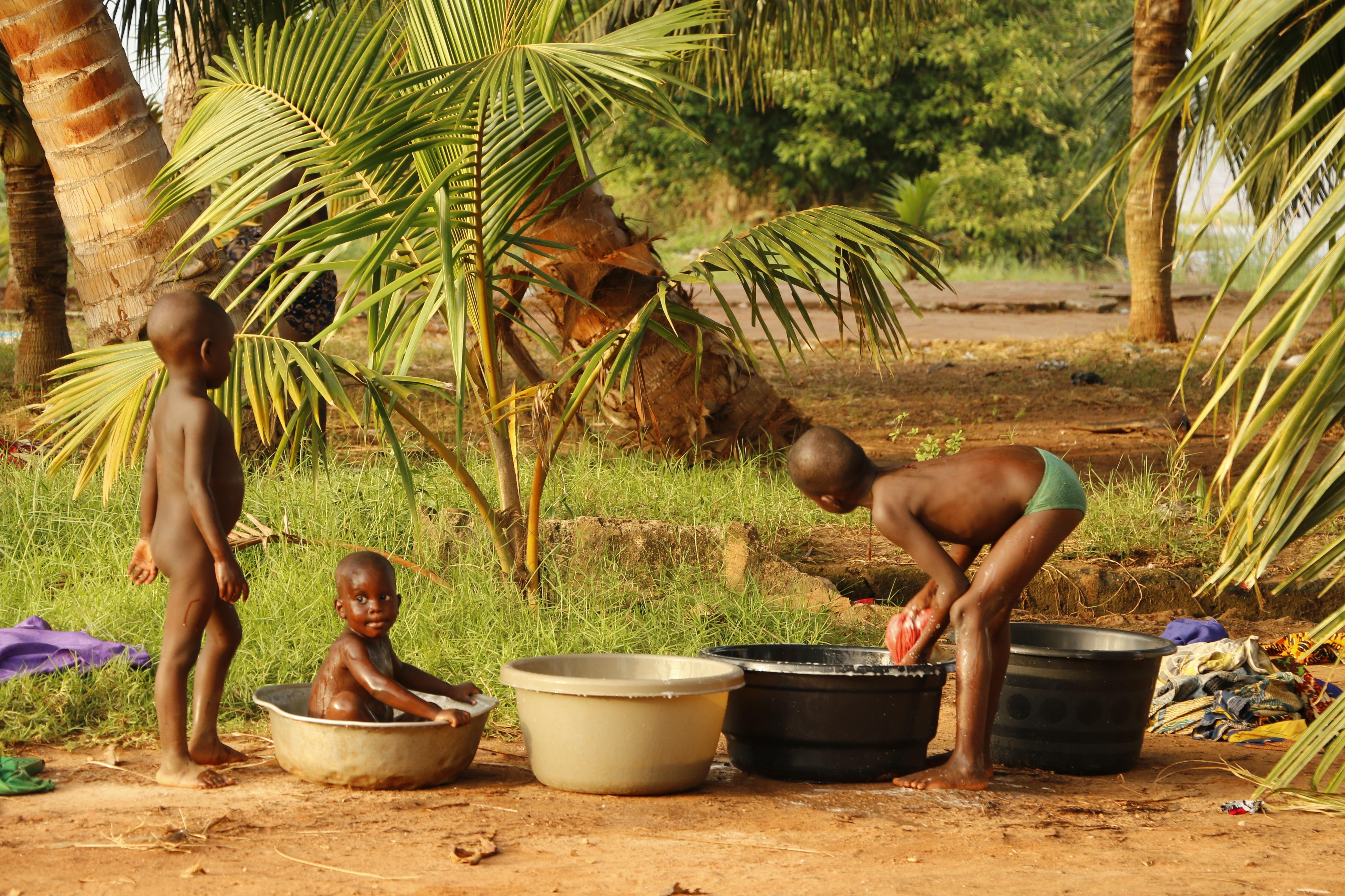 Gratis billeder tr natur plante dreng rejse jungle for Plante jungle