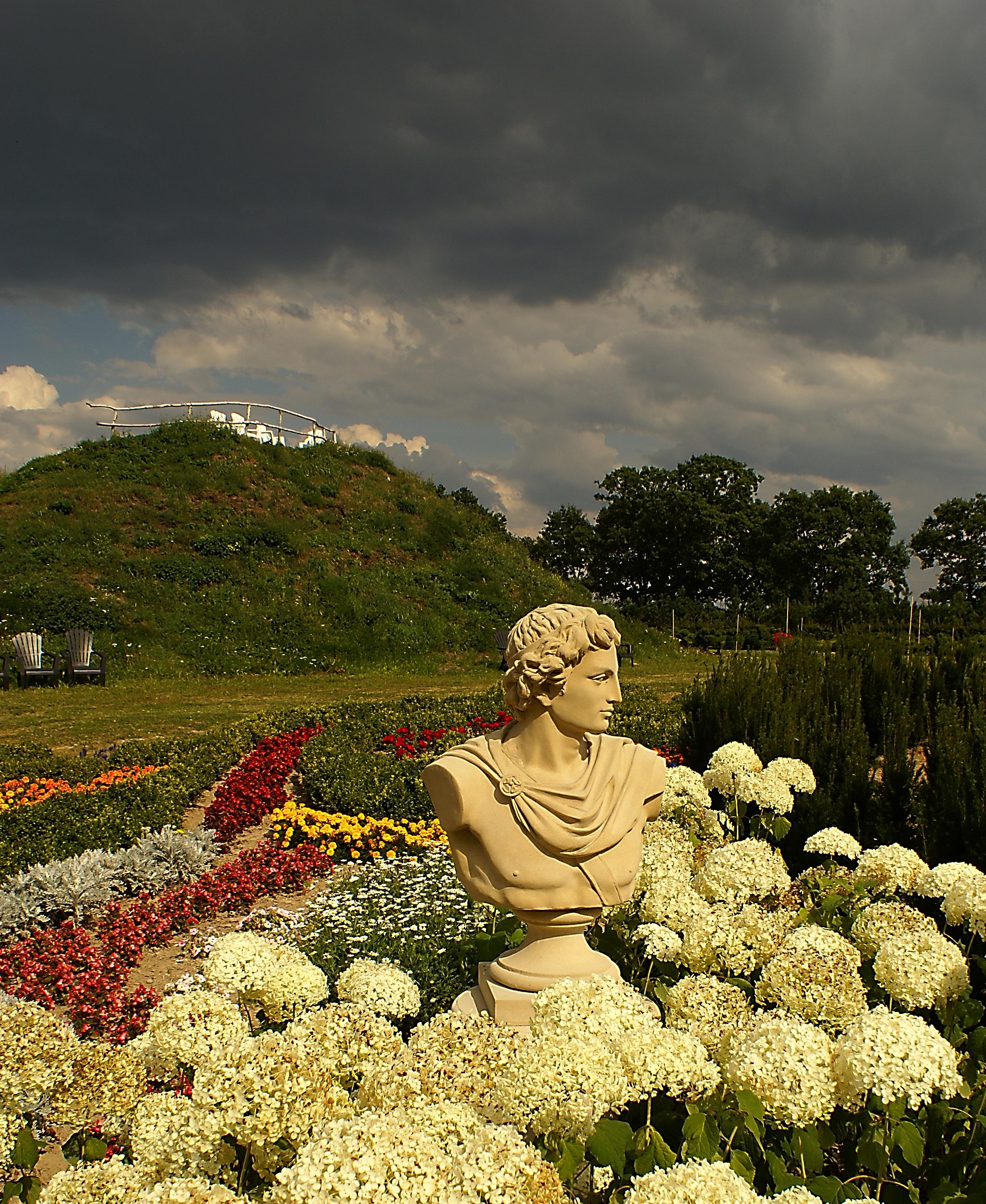Fotos gratis rbol naturaleza planta campo luz de for Arboles para plantar en verano