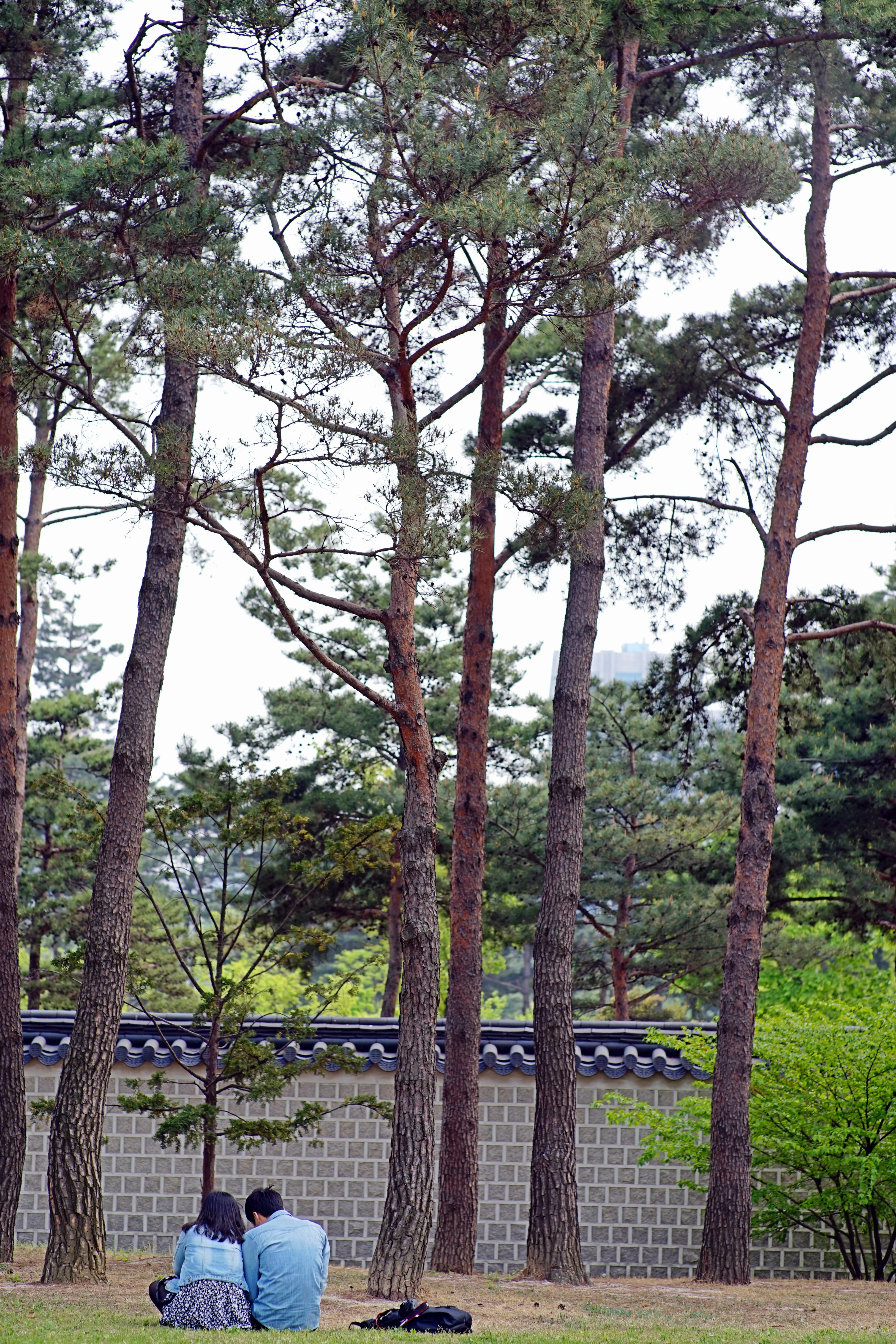 Baum Natur Pflanze Blume Park Landschaft Hinterhof Botanik Garten Liebhaber  Unterbrechung Paar Wald Garten Gyeongbok Palast