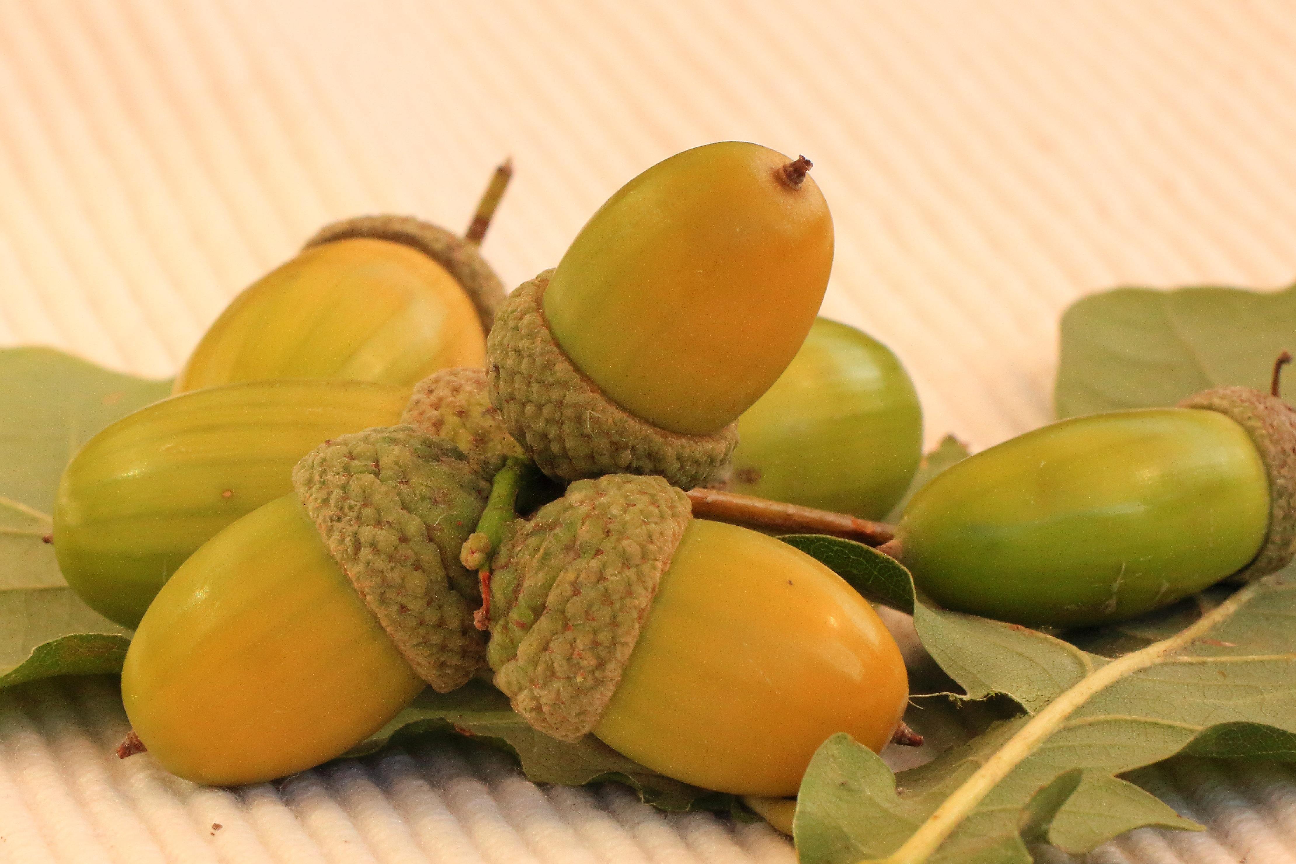 cây thiên nhiên thực vật trái cây món ăn Sản xuất Mùa thu trái cây Trái