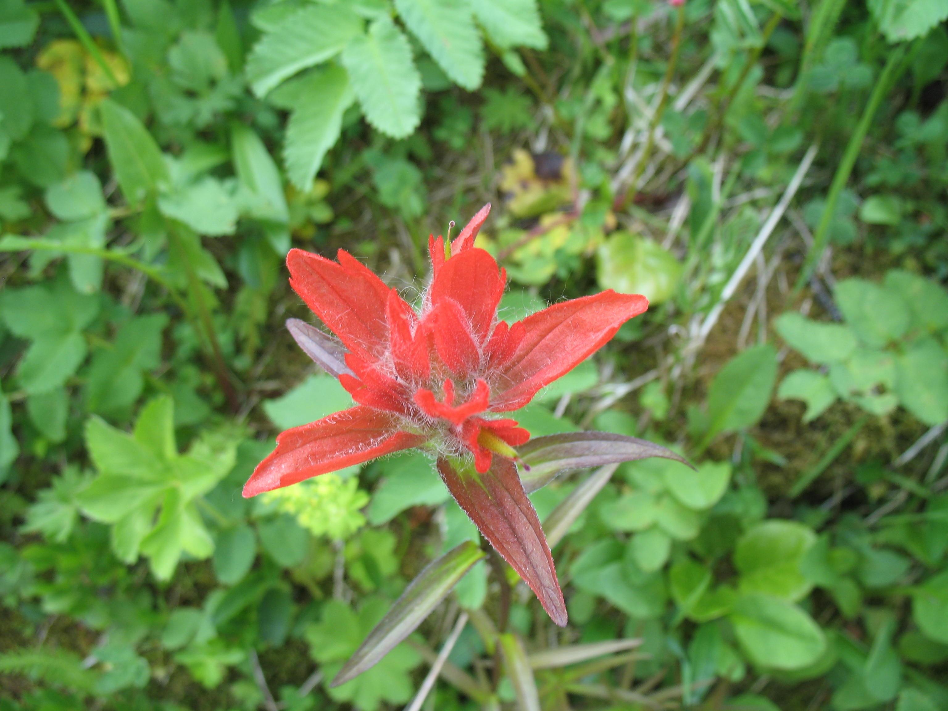 free images tree nature lawn leaf flower bloom spring