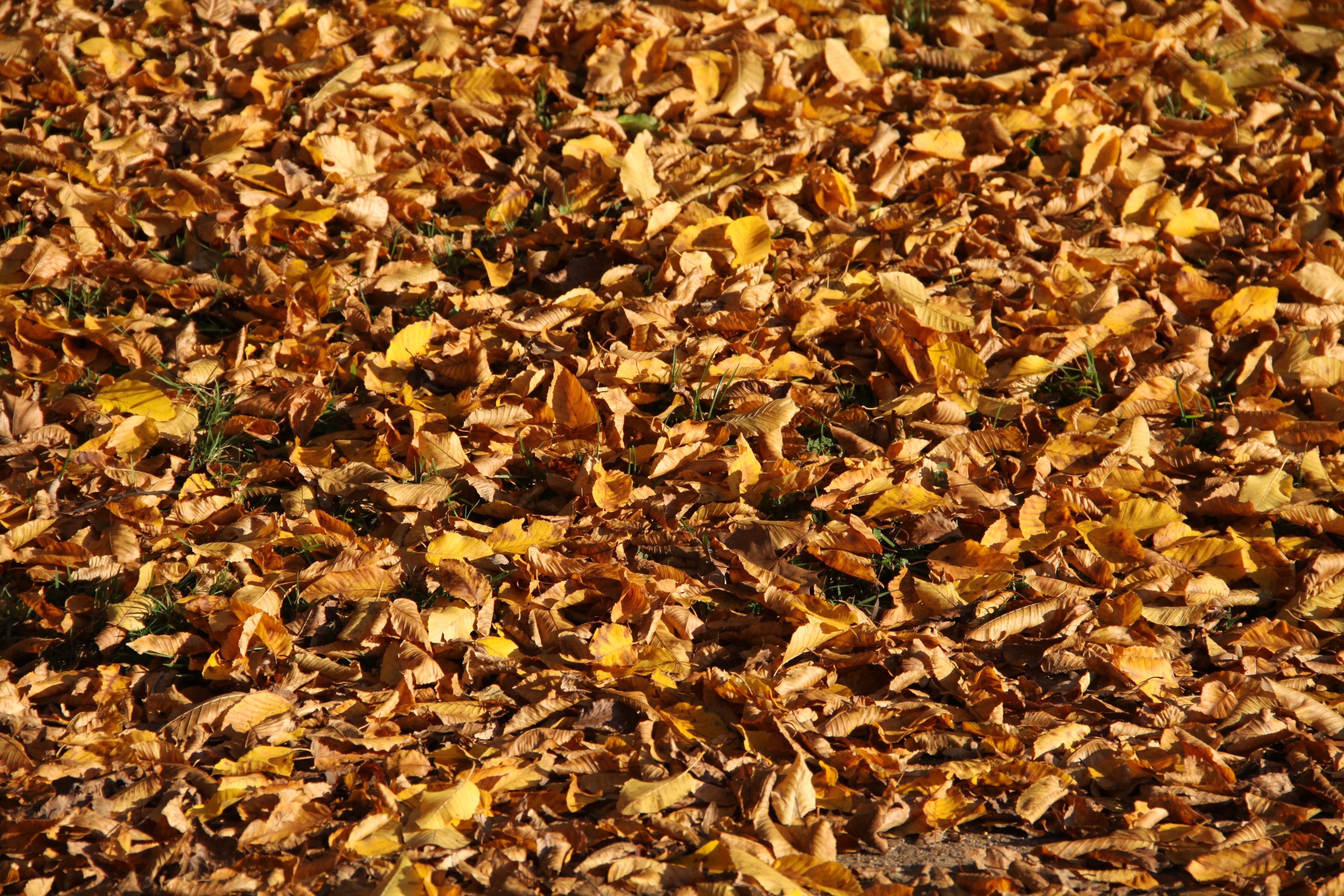 Gratis afbeeldingen boom natuur fabriek vallen bloem for Soil yellow color