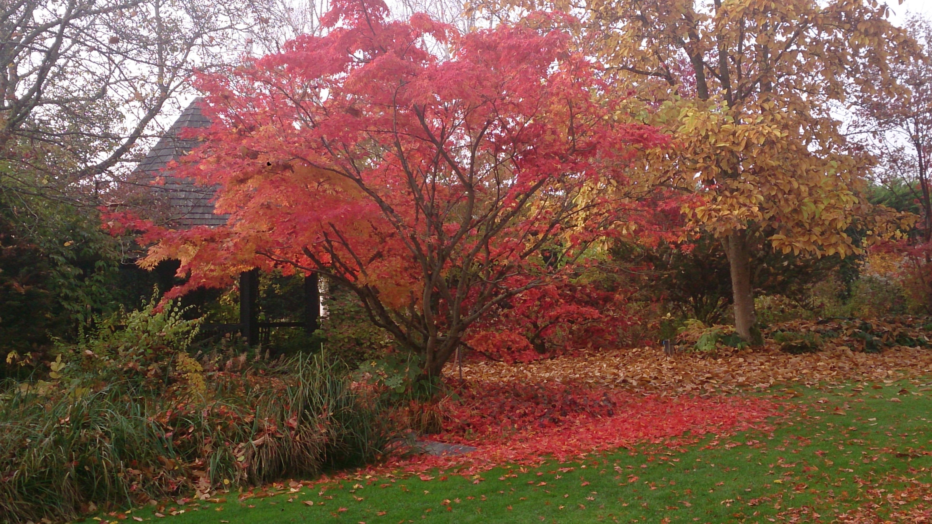 Free Images : nature, leaf, flower, autumn, botany, garden, season ...
