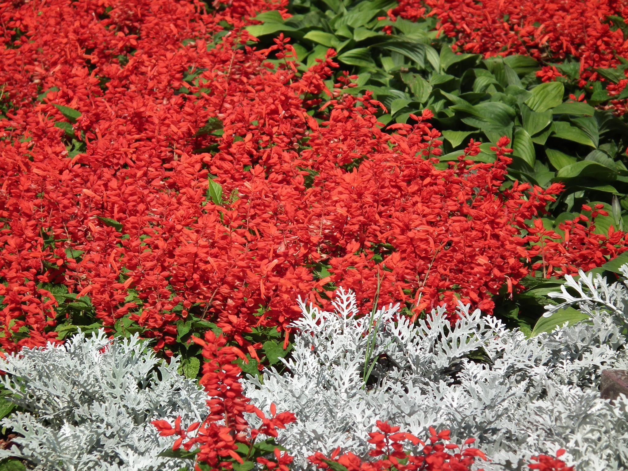 Images gratuites arbre la nature feuille fleur floraison t printemps rouge l 39 automne - Arbuste fleur rouge printemps ...