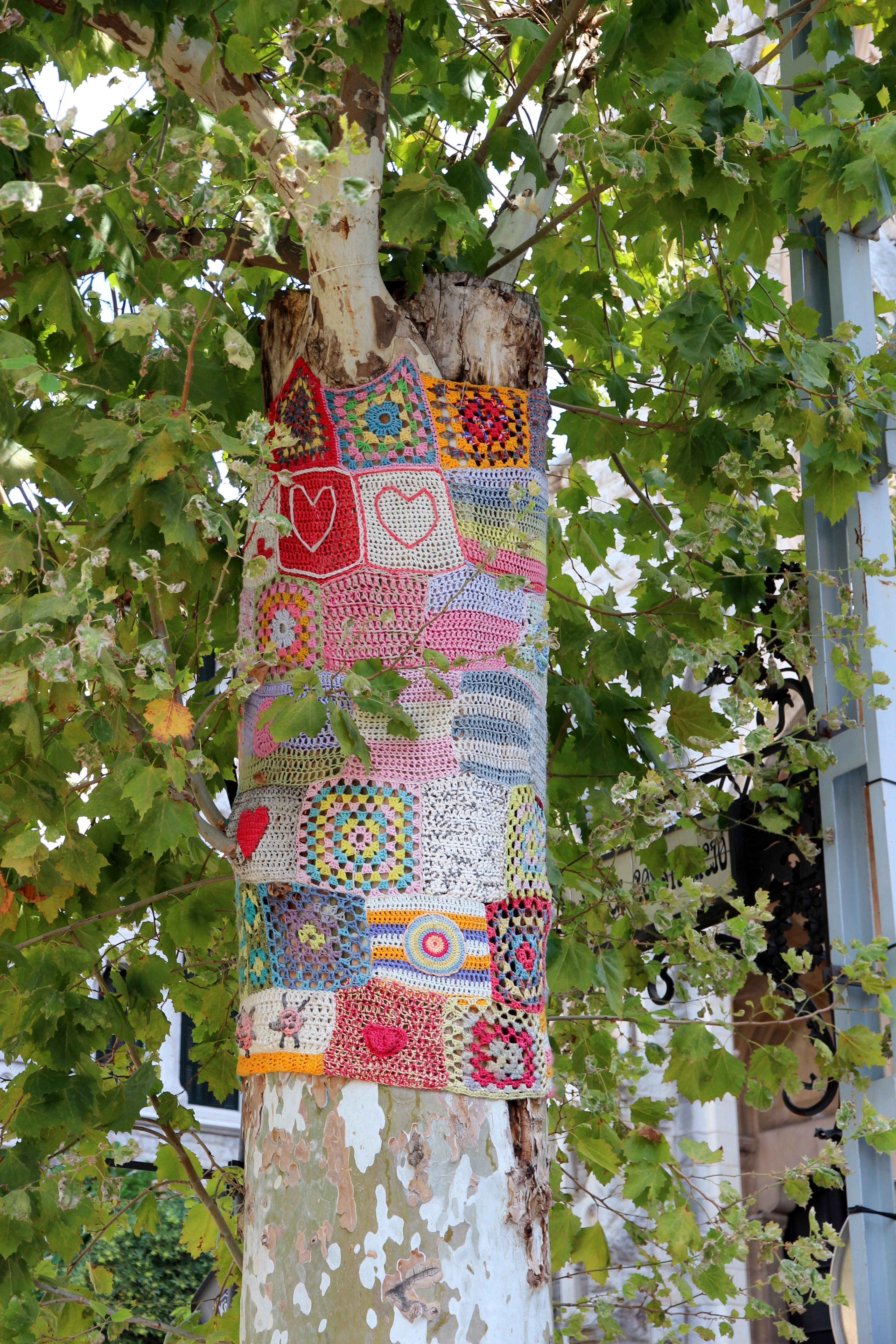 Fotos gratis : árbol, naturaleza, planta, hoja, flor, vistoso, color ...