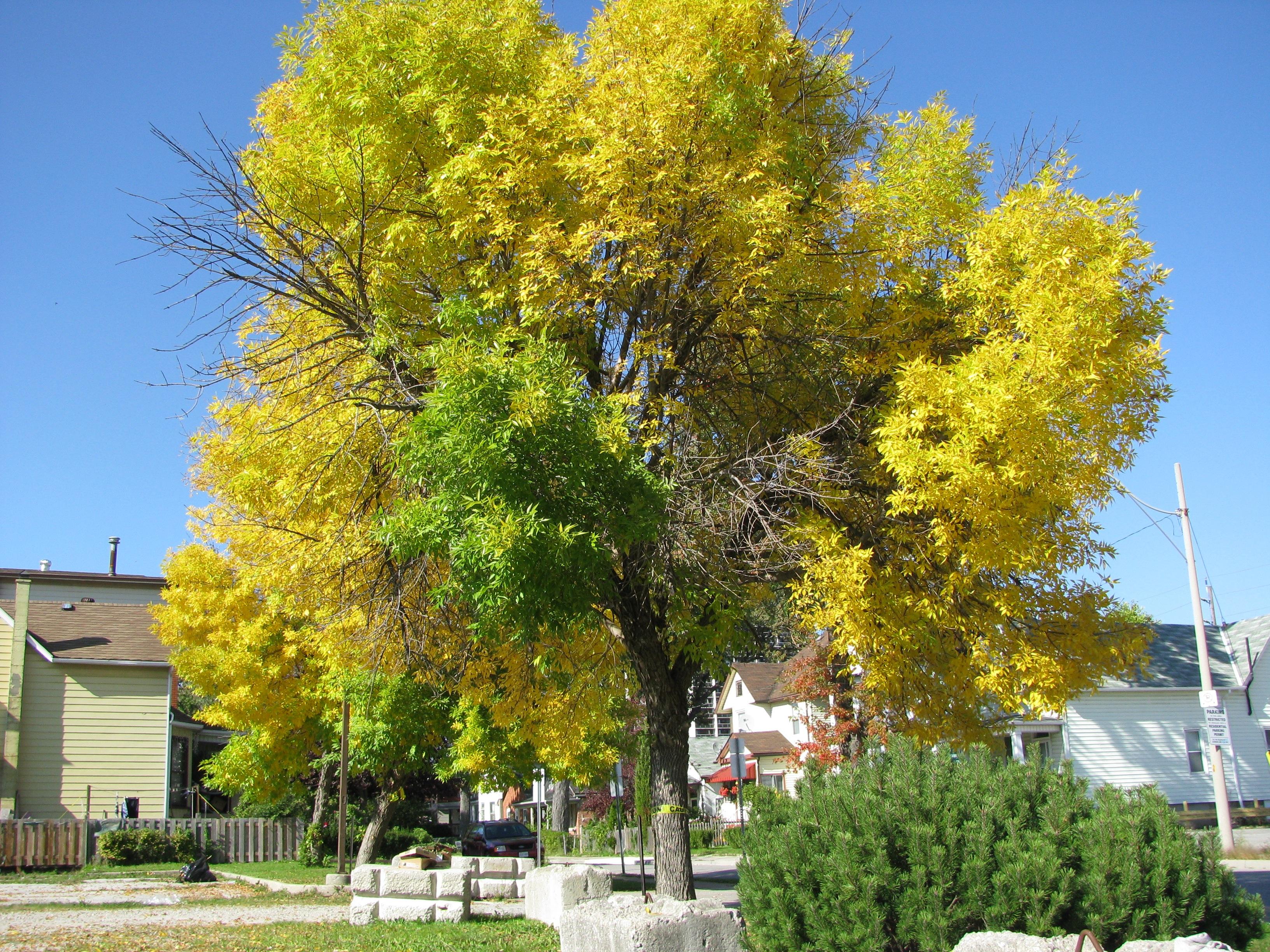Free Images : nature, leaf, flower, foliage, color, autumn, season ...
