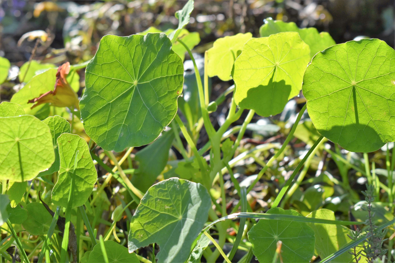 free images tree nature flower food produce botany
