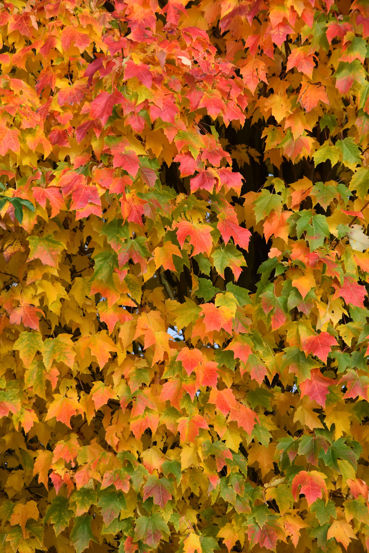 Fotos gratis : naturaleza, flor, verde, rojo, amarillo, temporada ...