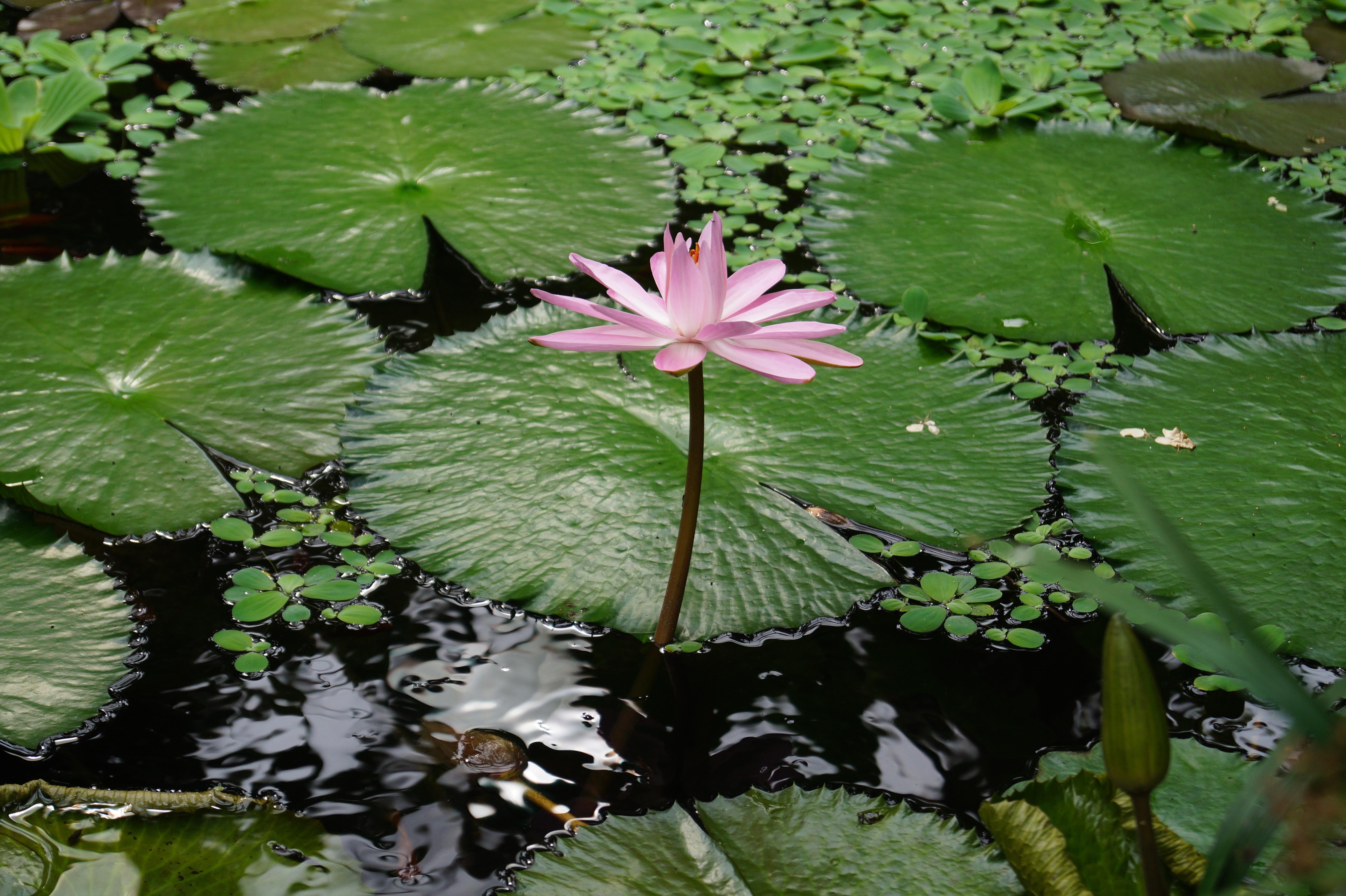 free images tree nature leaf flower pond green botany