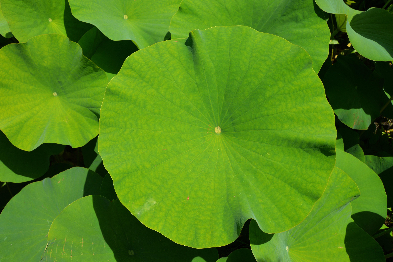 Fotoğraf Ağaç Doğa Yaprak çiçek Gölet Yeşil üretmek Park