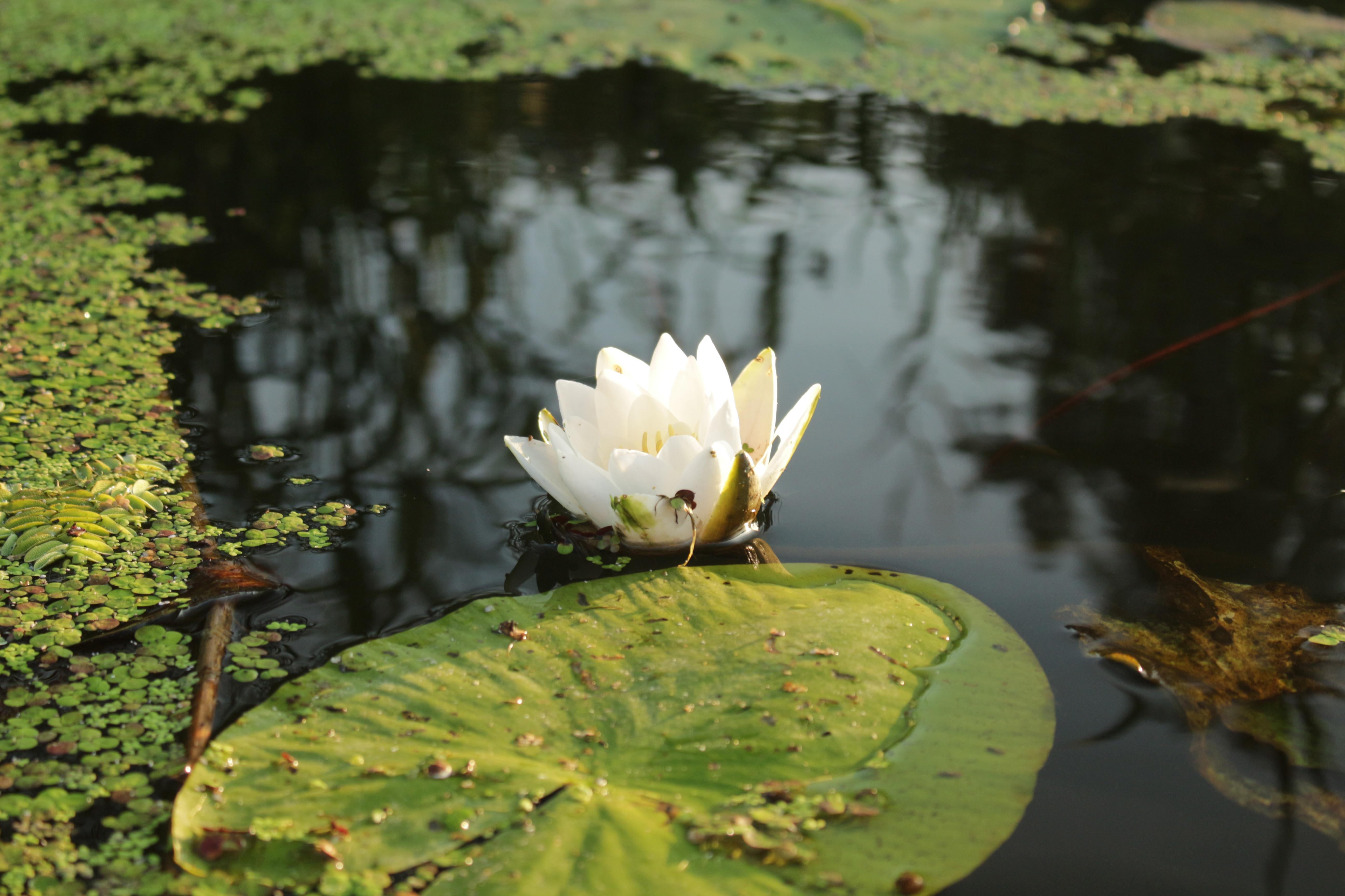 Картинки растение и животные водоемов
