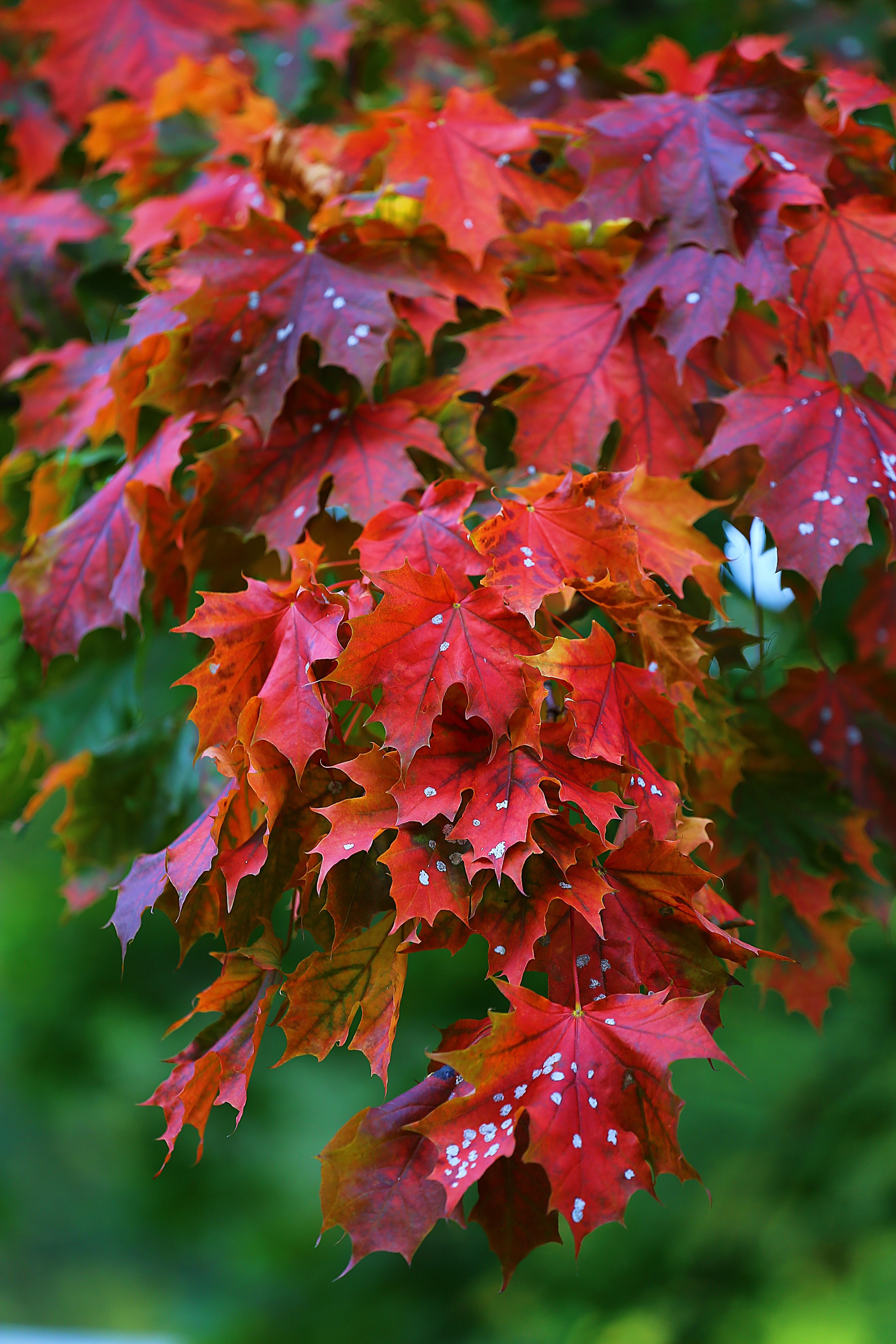 Красивые цветущие деревья: фото и названия - m 55