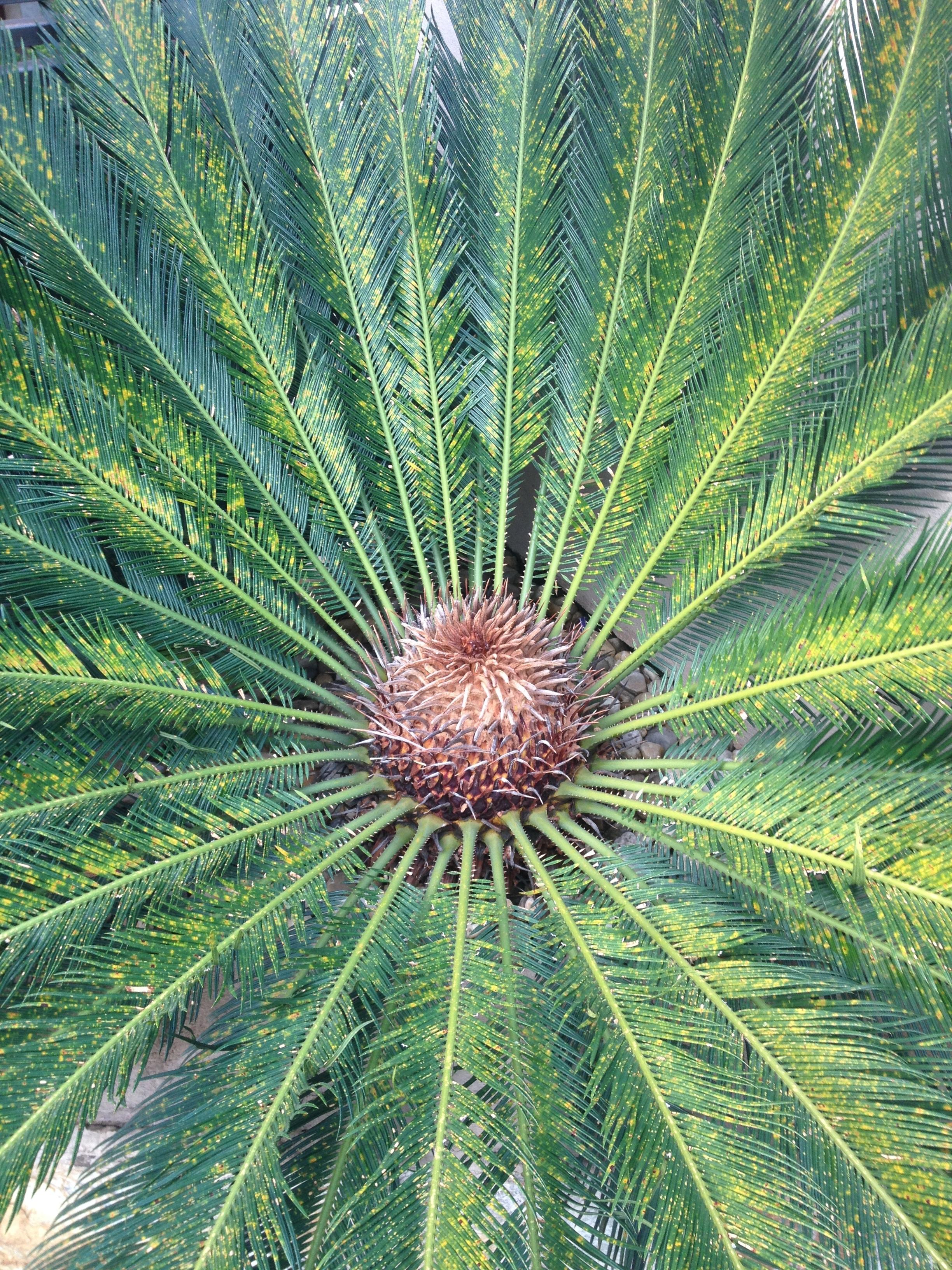 Extrêmement Images Gratuites : arbre, la nature, feuille, fleur, vert  HC88