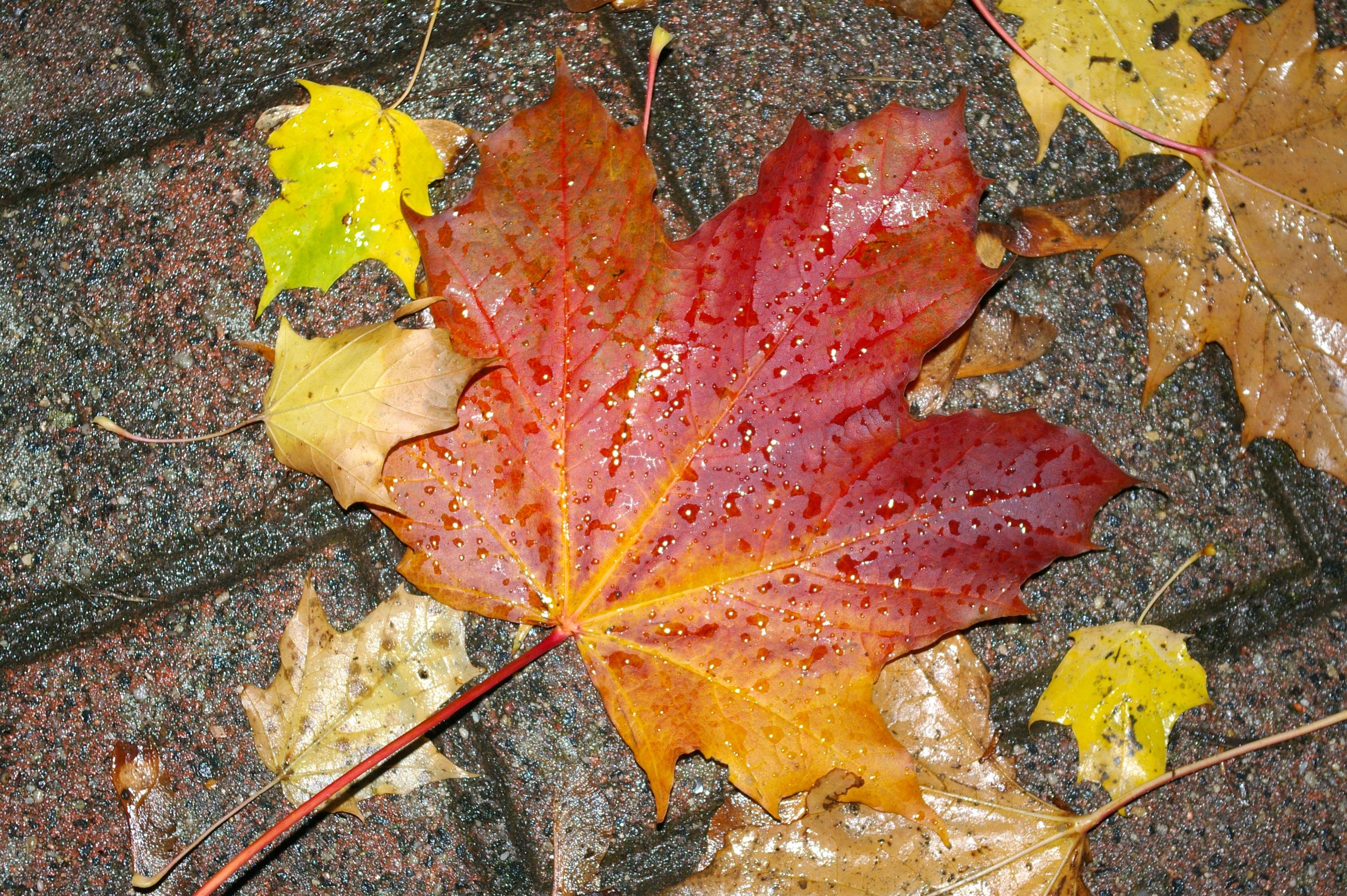 шин, картинки осень наступила след улыбка осени лист иконы иконы