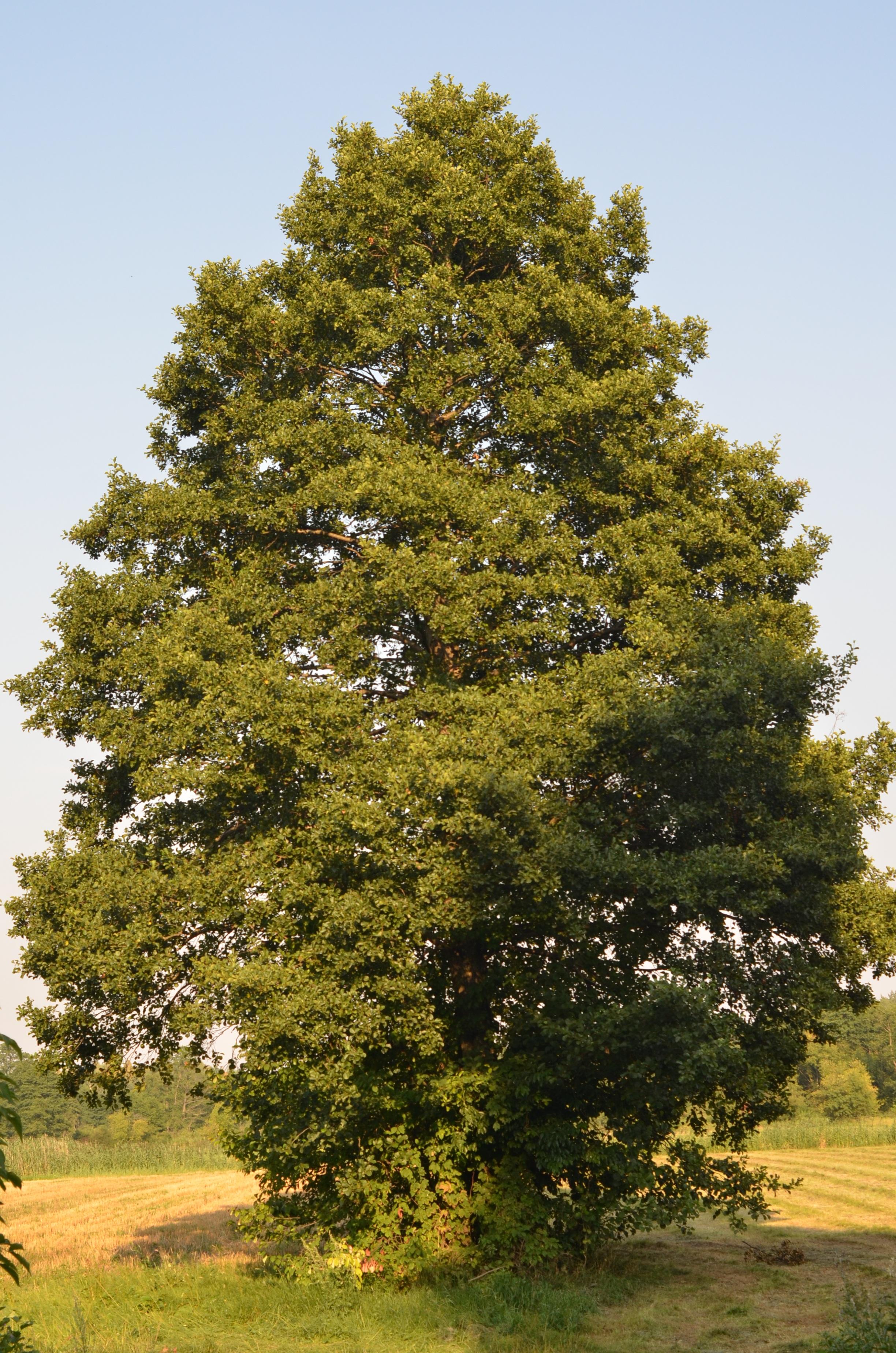 Fotos gratis naturaleza cielo verde hojas perennes for Plantas de hojas perennes para jardin