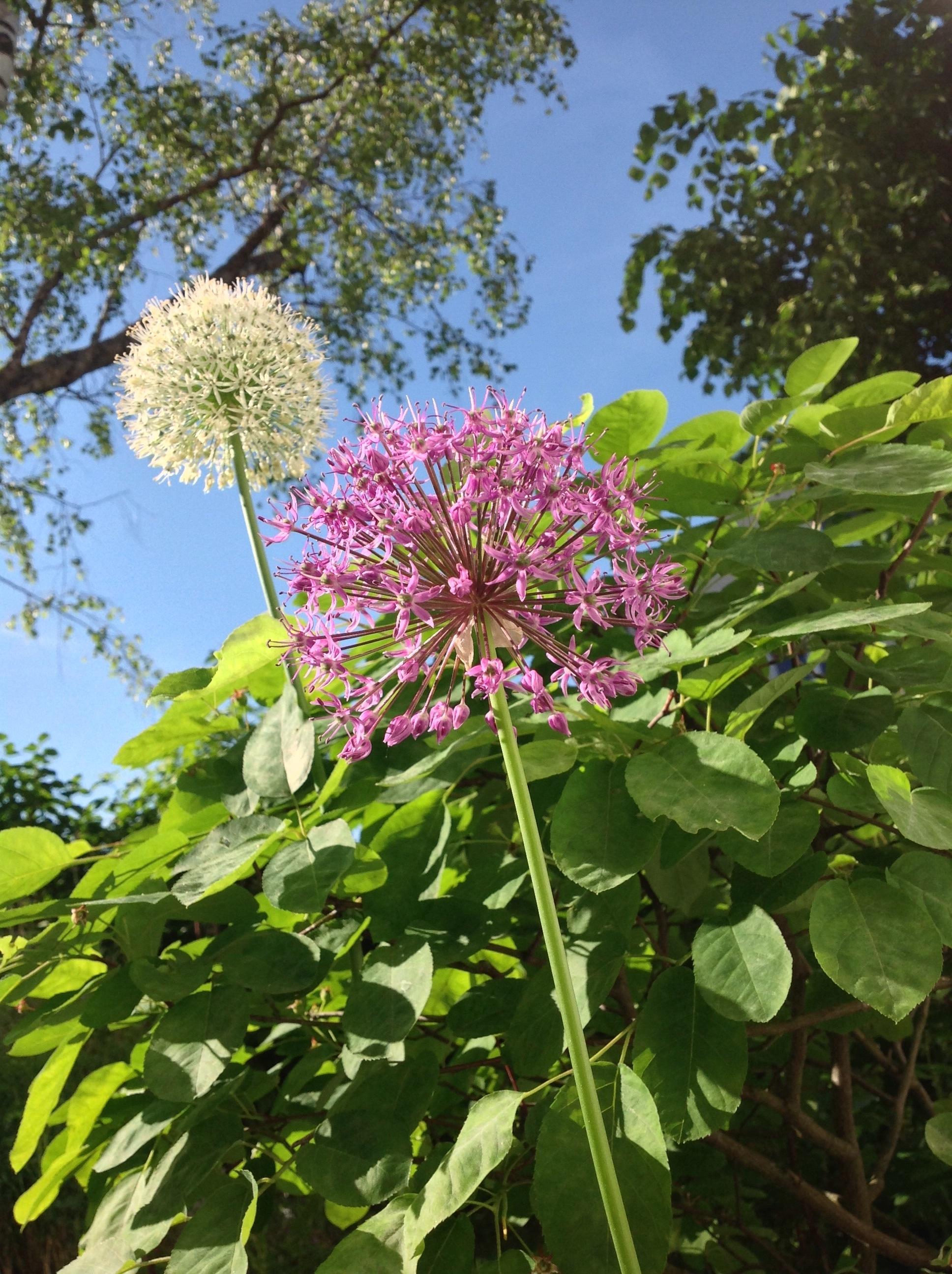 Free Images Tree Nature Sky White Flower Bush Green Botany