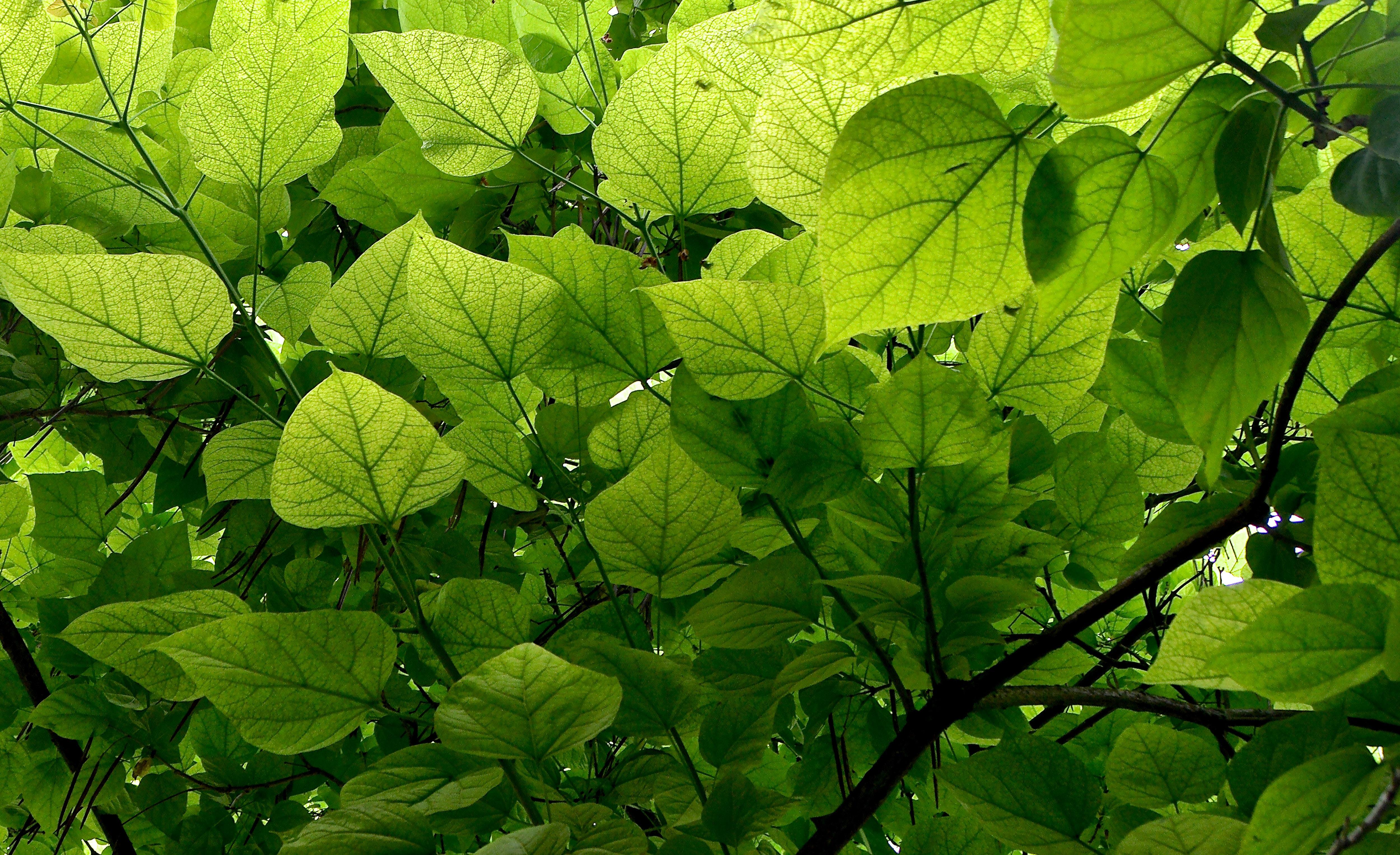 Gratis Afbeeldingen Boom Natuur Fabriek Zonlicht