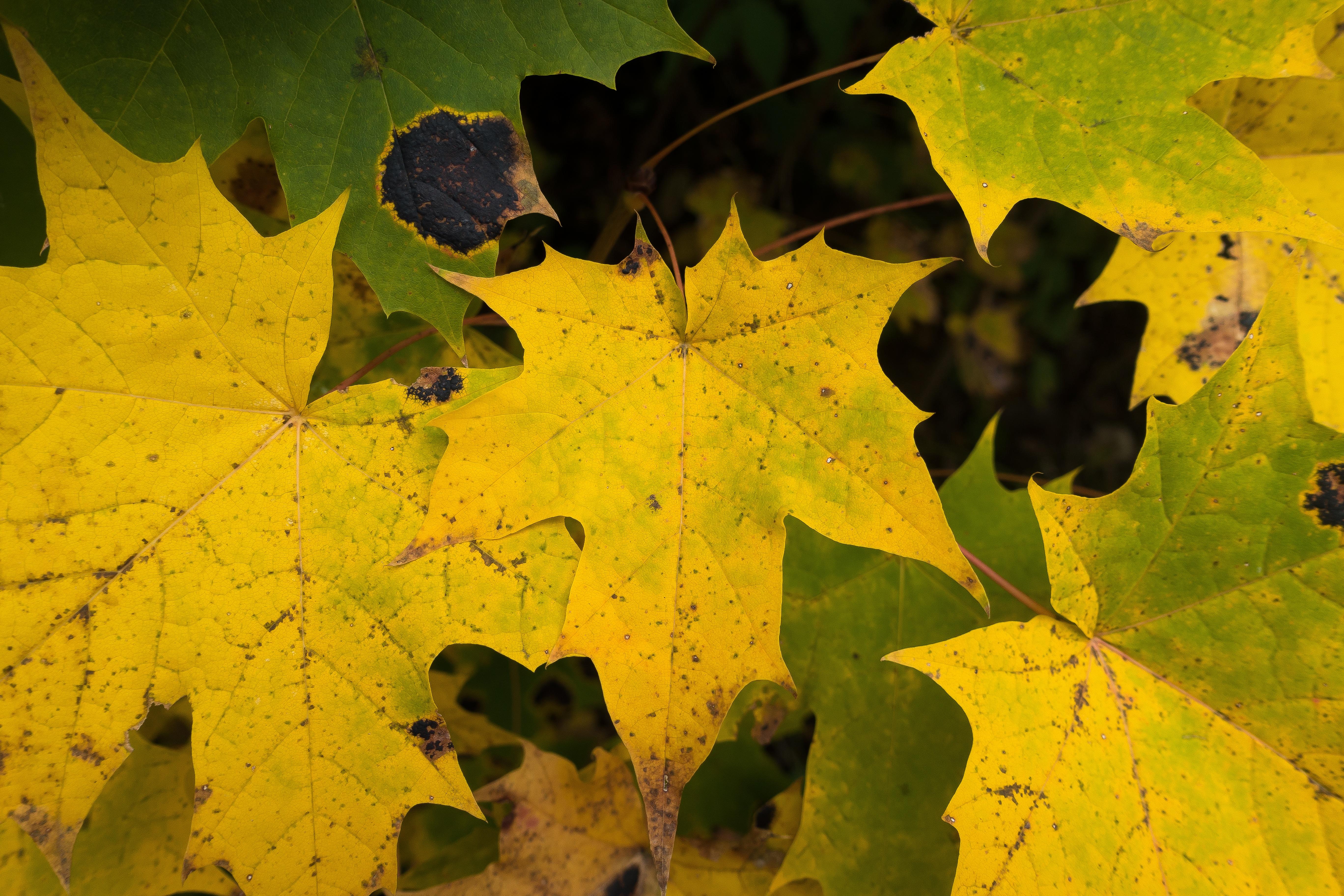 Fotoğraf Ağaç Doğa Güneş ışığı Yaprak çiçek Yeşil Sonbahar