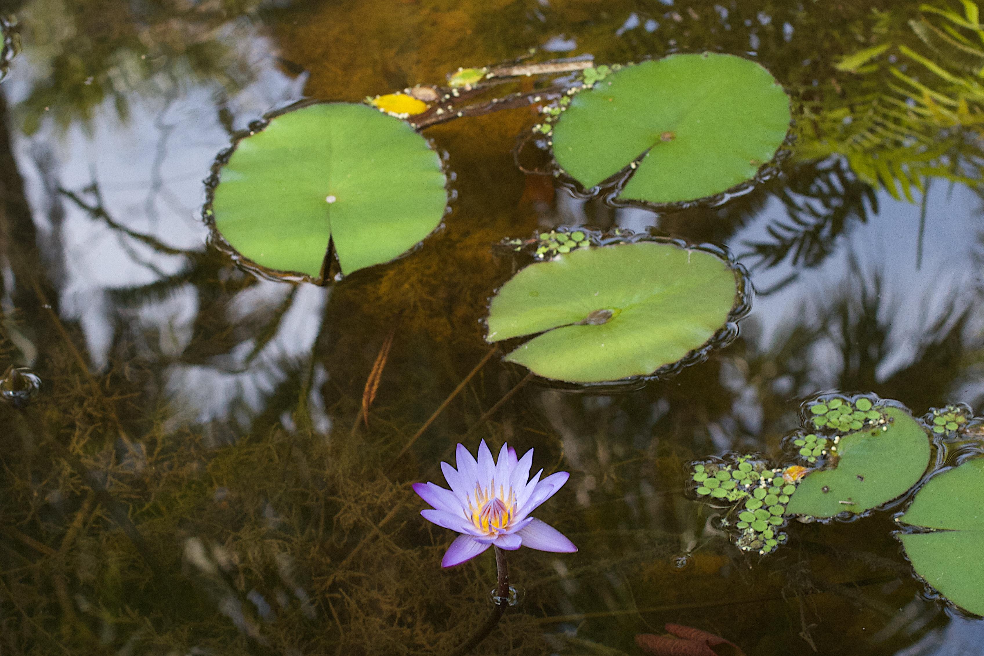 free images tree nature sunlight leaf flower pond green