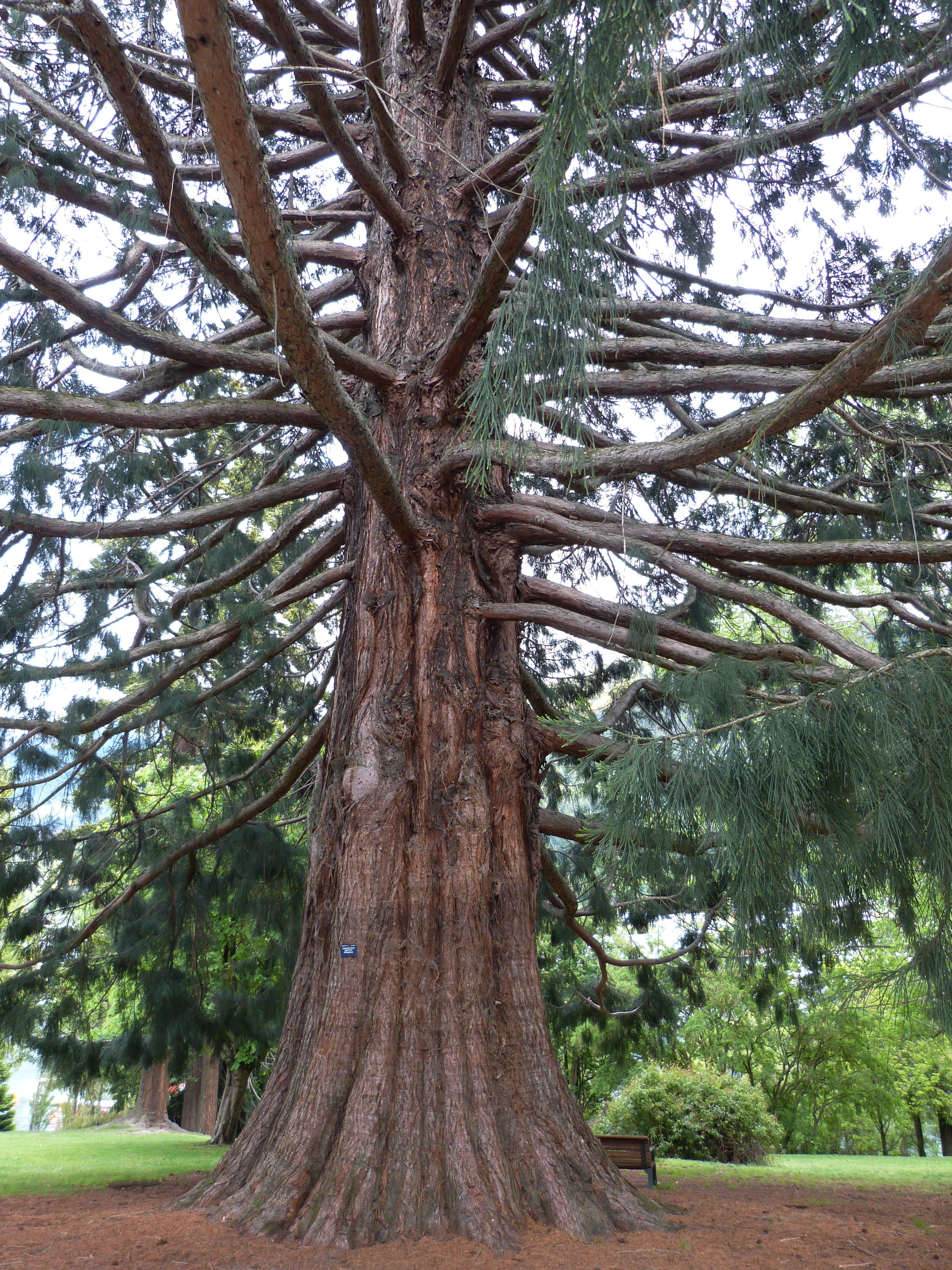 free images tree nature trunk log produce park botany