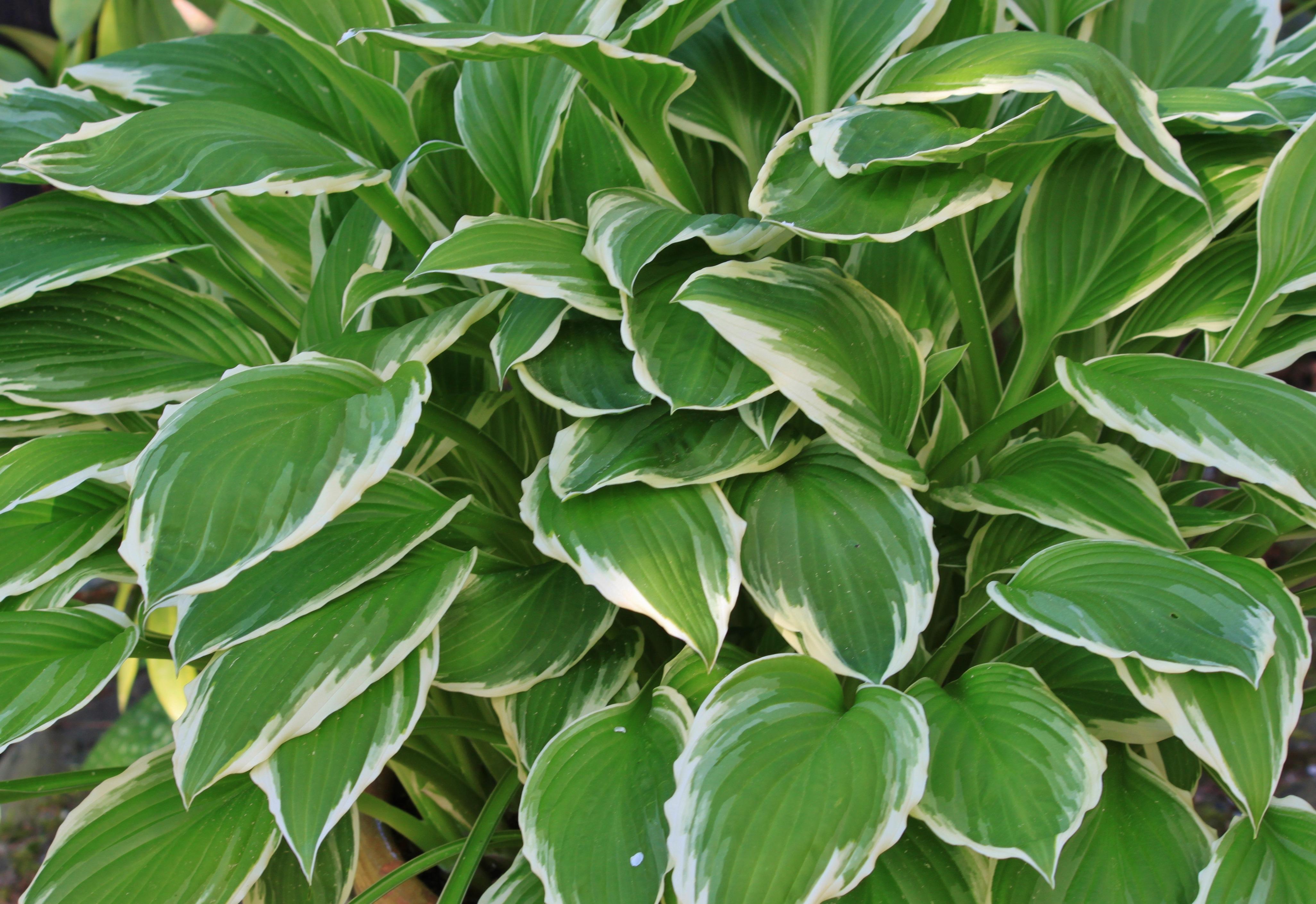 Fotos gratis rbol naturaleza blanco hoja flor for Aspiradora de hojas para jardin