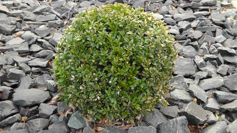 Kostenlose foto Baum Natur Rock Blatt Blume Busch Grün
